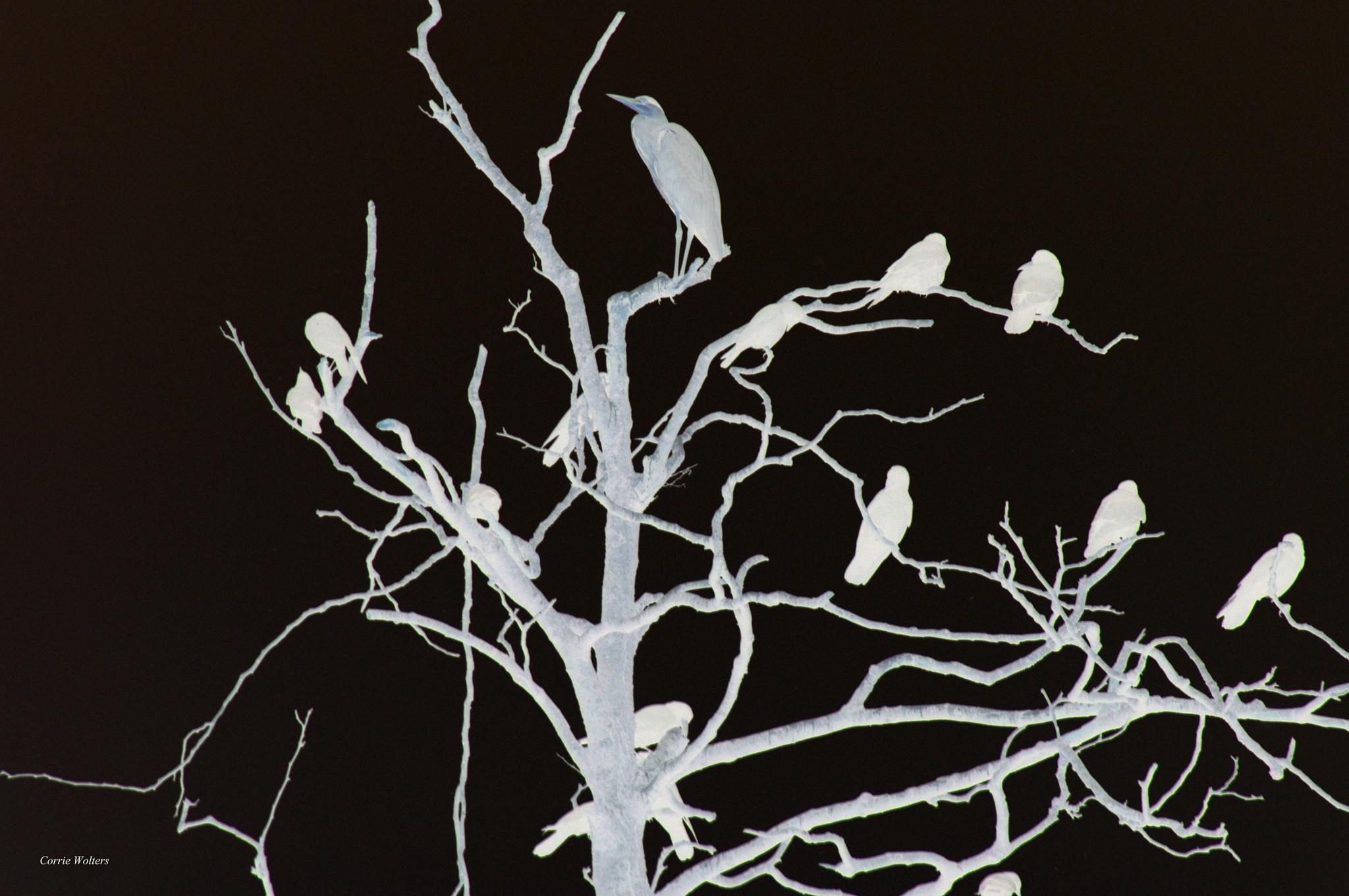 Birds on the night by Scooterlady