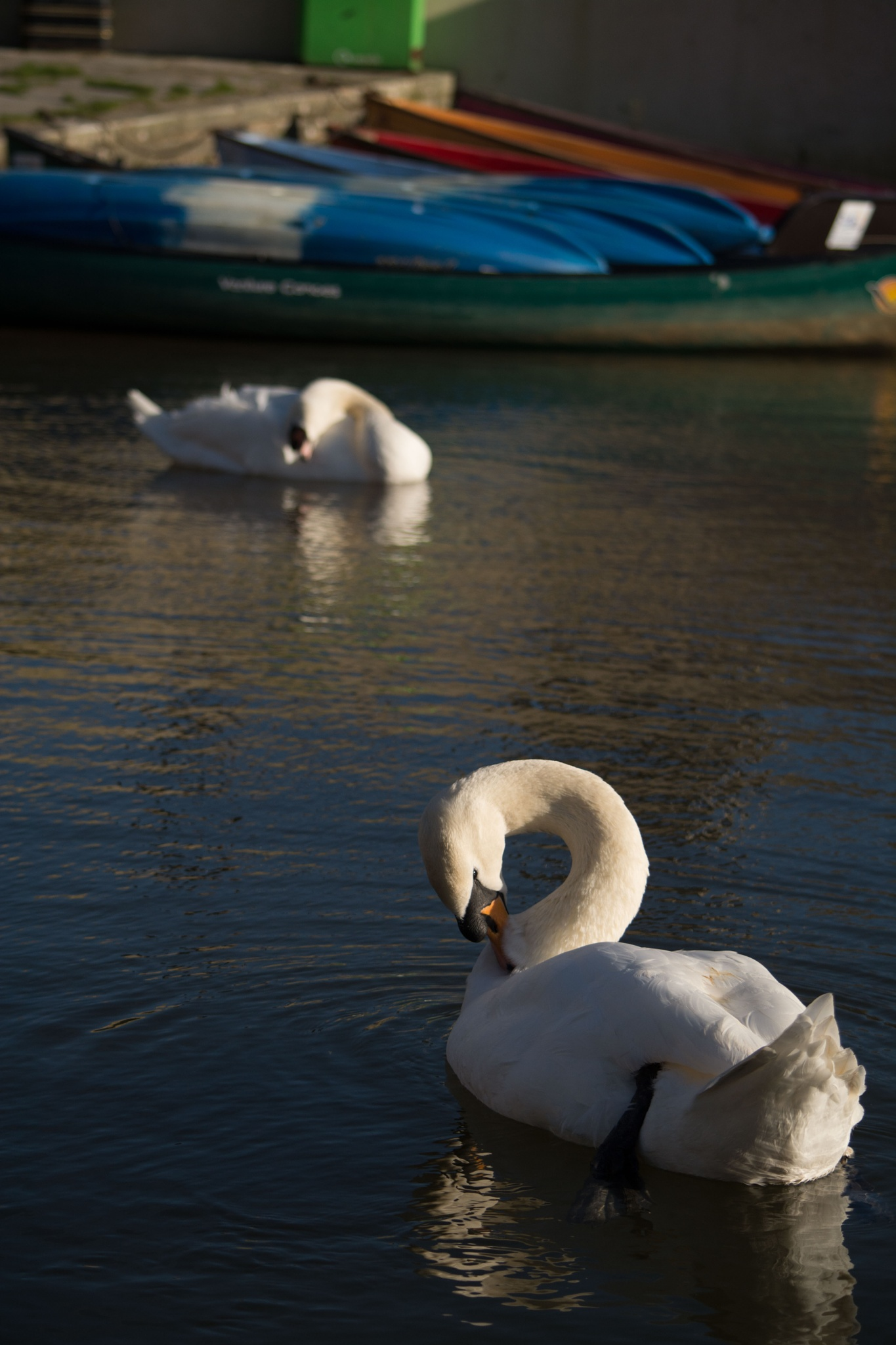 Swan Lake by Clement