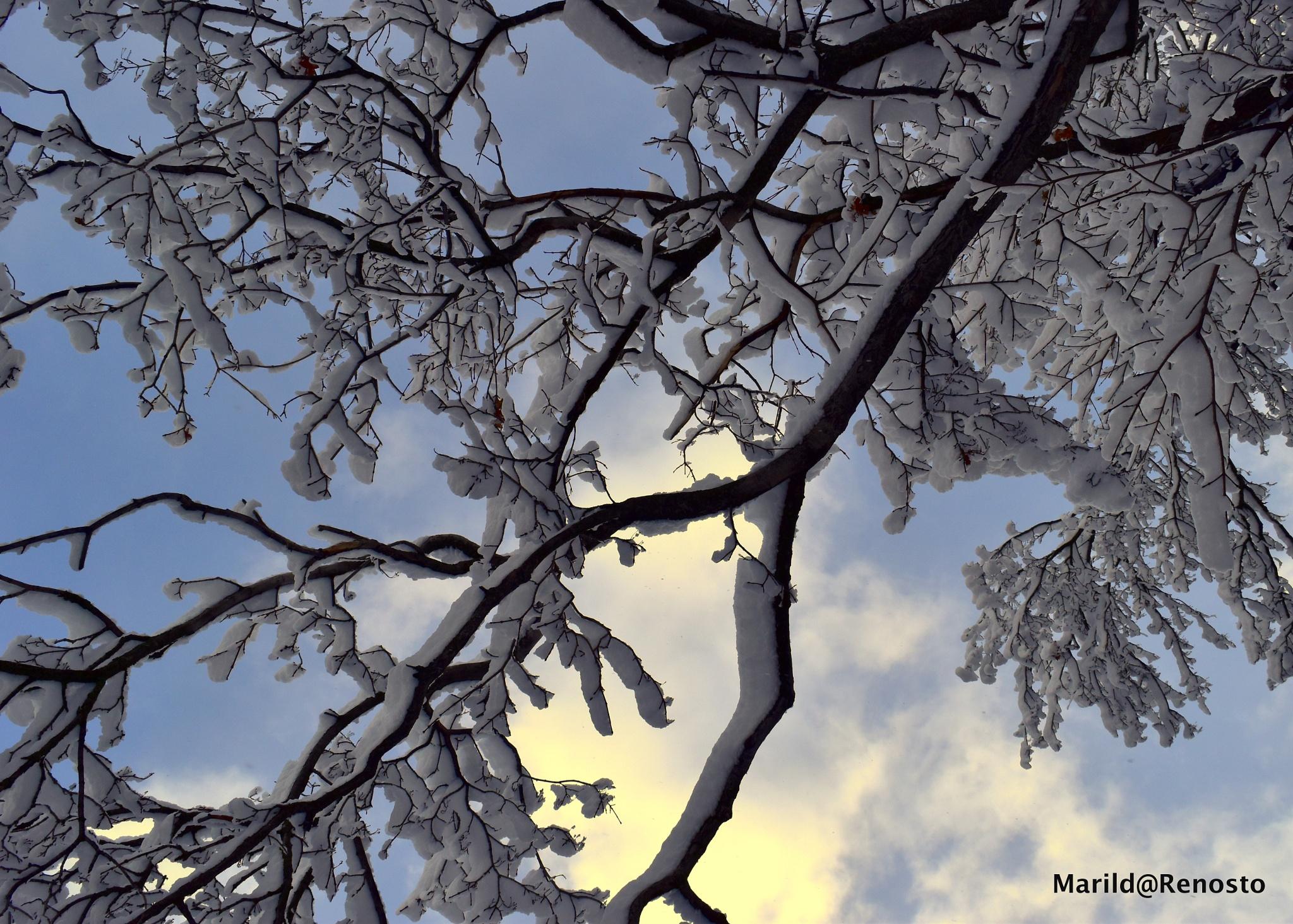 Winter by marilda.renosto