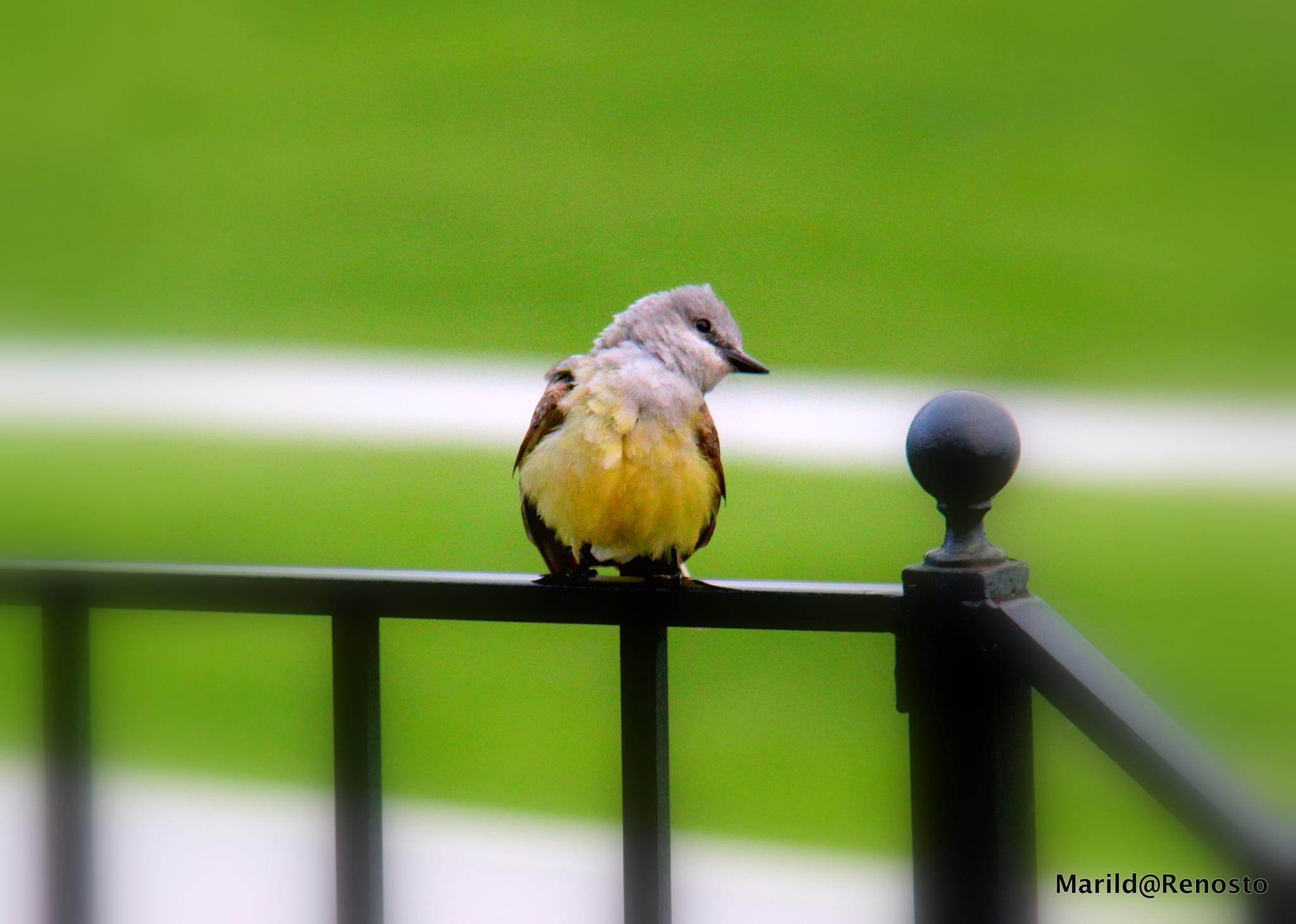 Bird by marilda.renosto