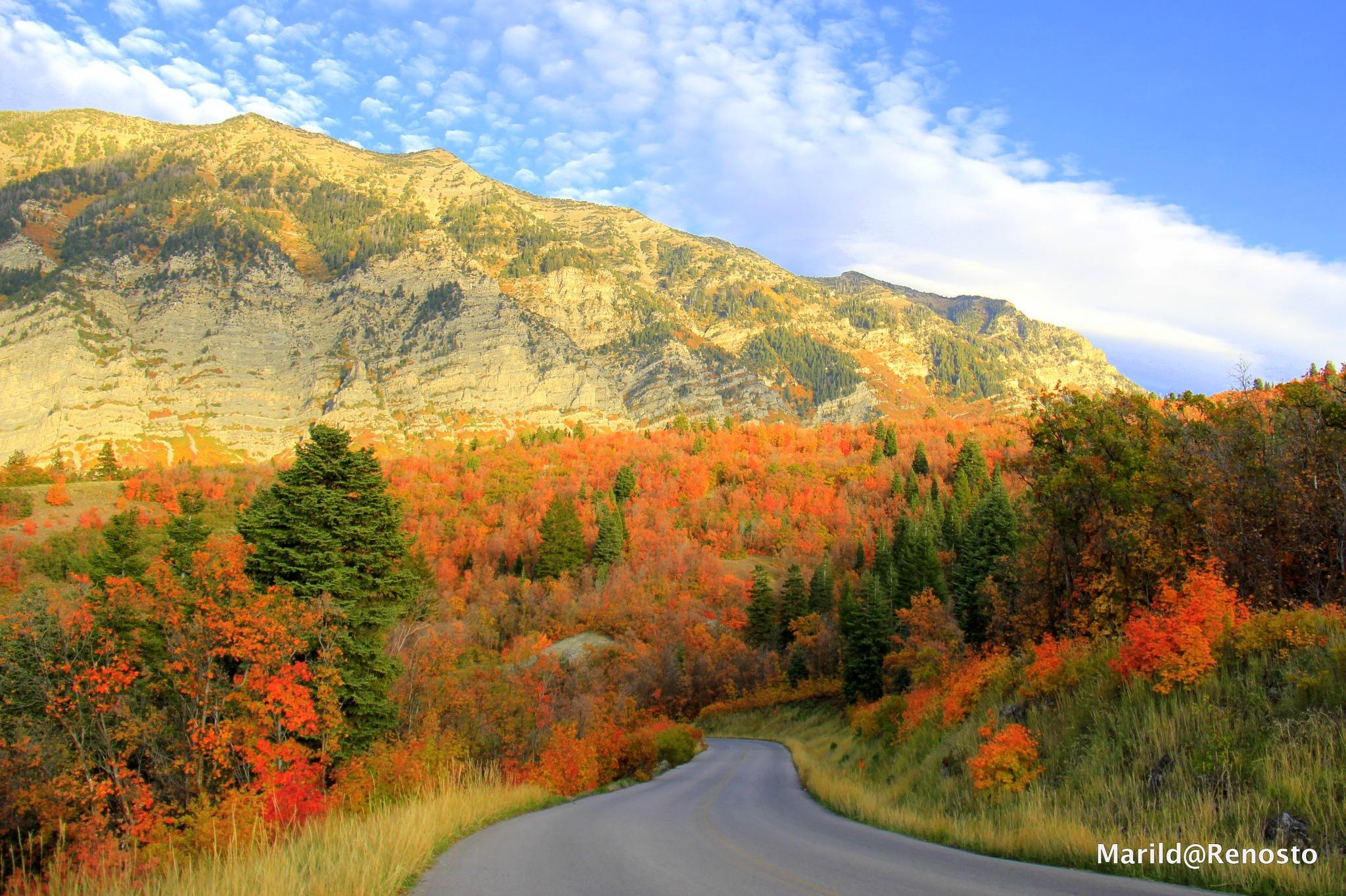 Autumn by marilda.renosto