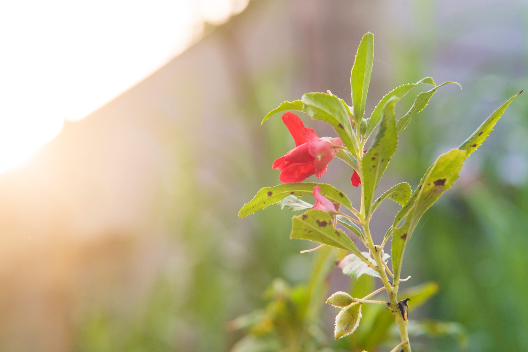 balsam by lequangchi