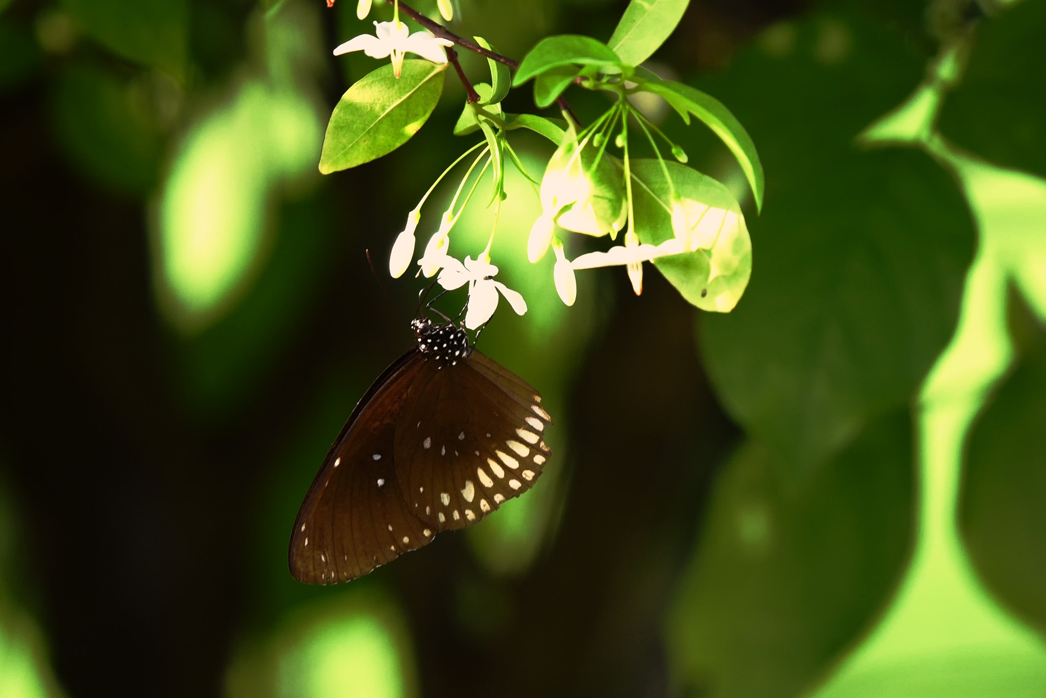 butterfly by lequangchi