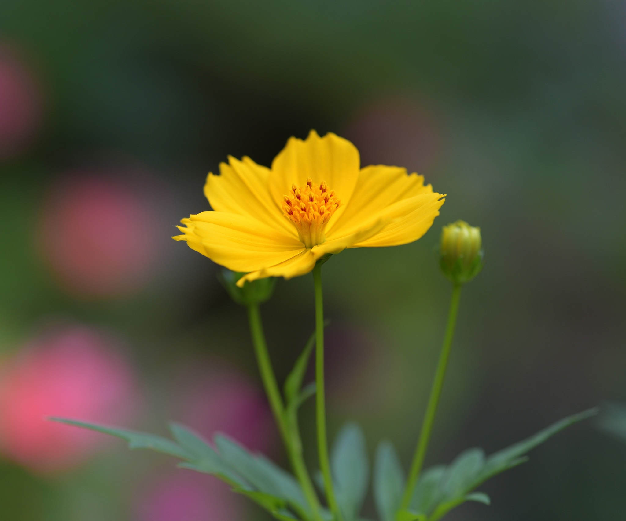 yellow flower by lequangchi