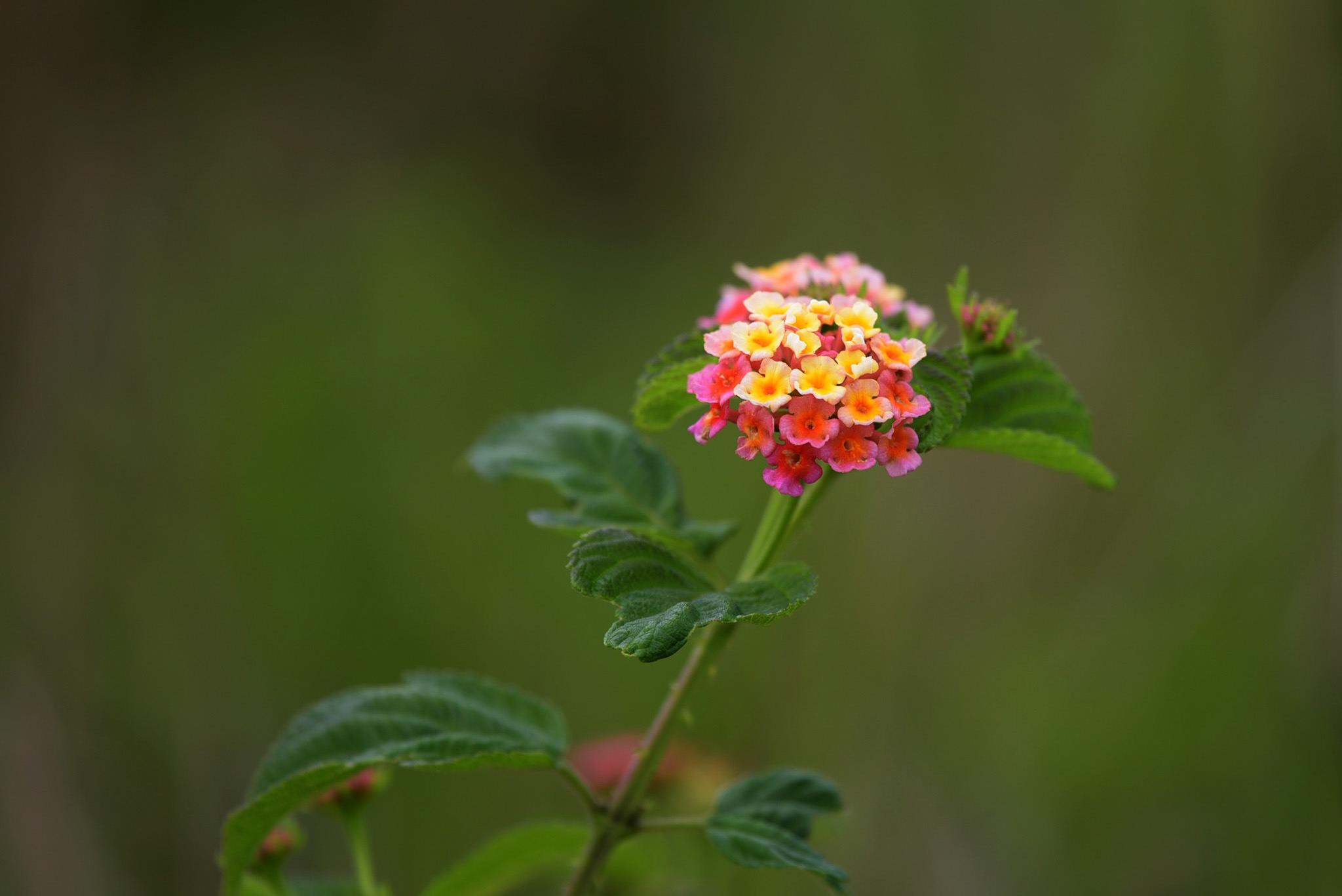wild flowers by lequangchi