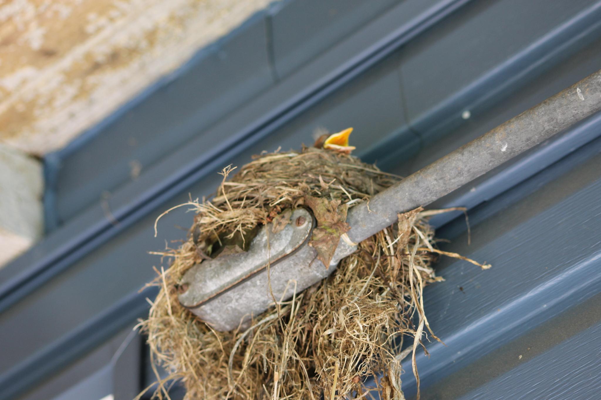 Baby Bird by vdotson05