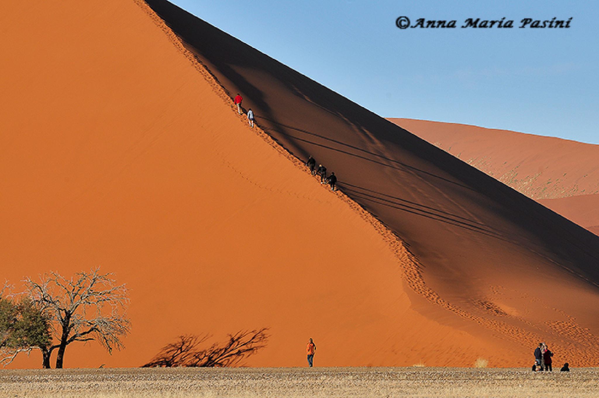 Duna di Sossusvlei (Namibia) by annamariapasini