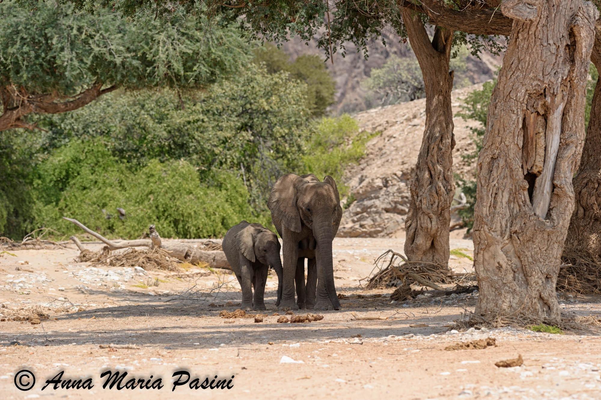 Elefanti del deserto by annamariapasini
