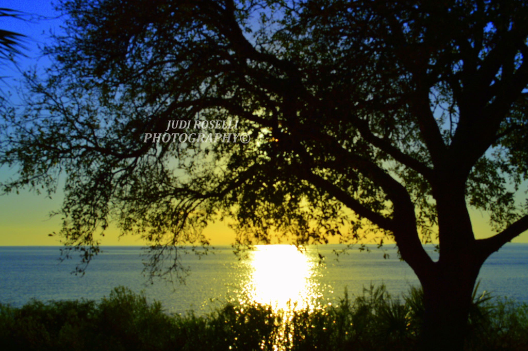 SUNSET FROM A TREE'S VIEW by JUDI ROSELLI