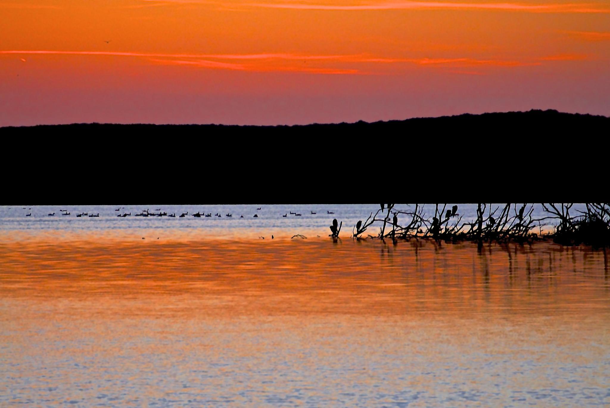 Photo in Nature #zwanenwater #sunset #birds #dunes #noord-holland