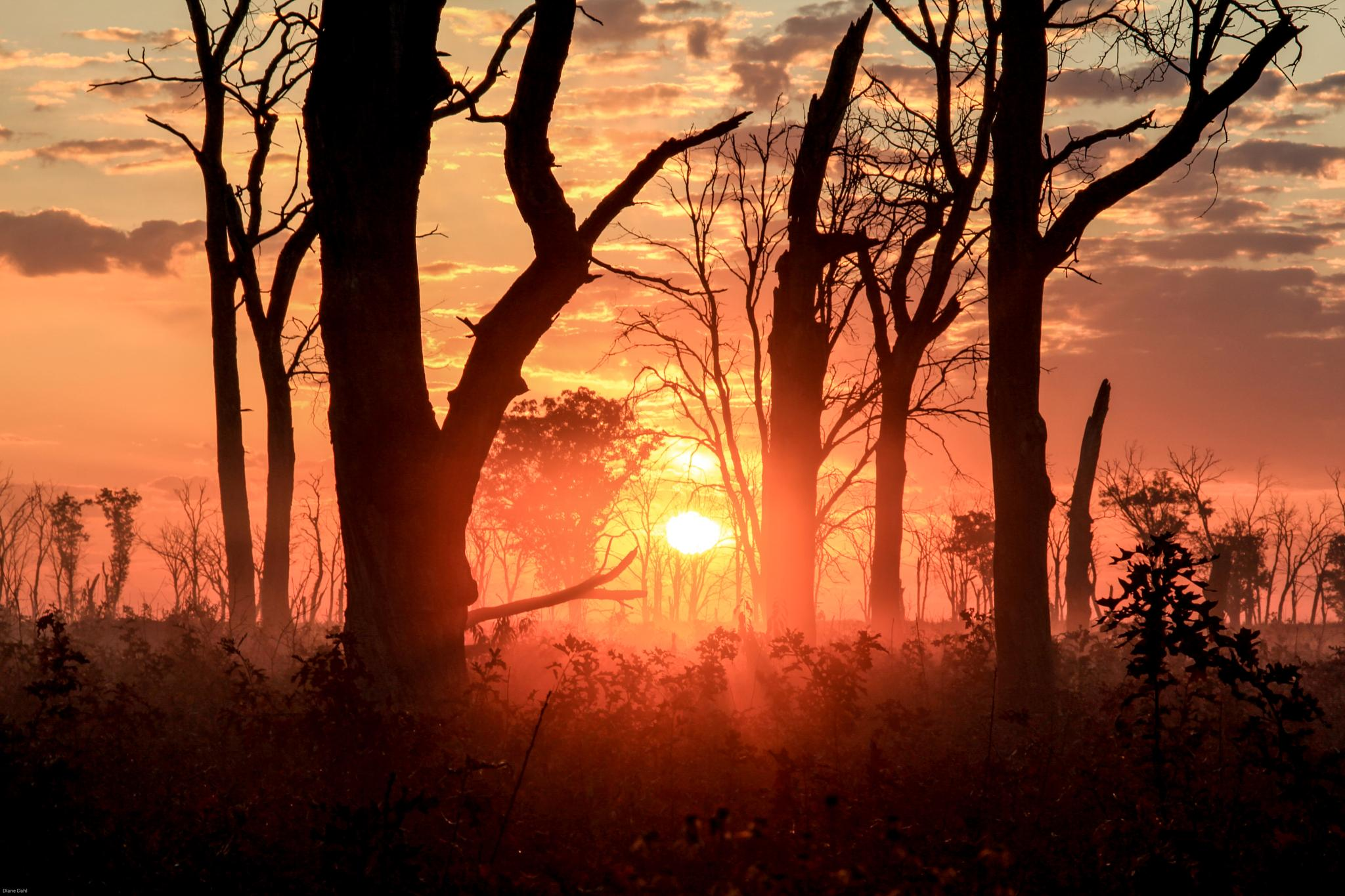 Photo in Landscape #sunrise #trees #refuge #necedah wildlige refuge #wisconsin