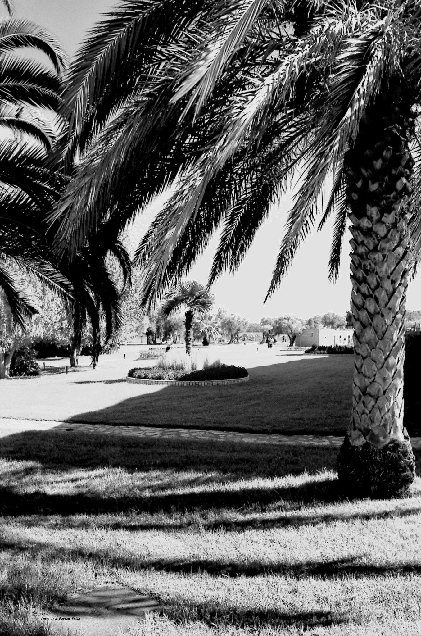 PALMERAS Y SOMBRAS ; PALMBOMEN EN SCHADUWEN ; PALM TREES AND SHADOWS by José Bernat Feixa
