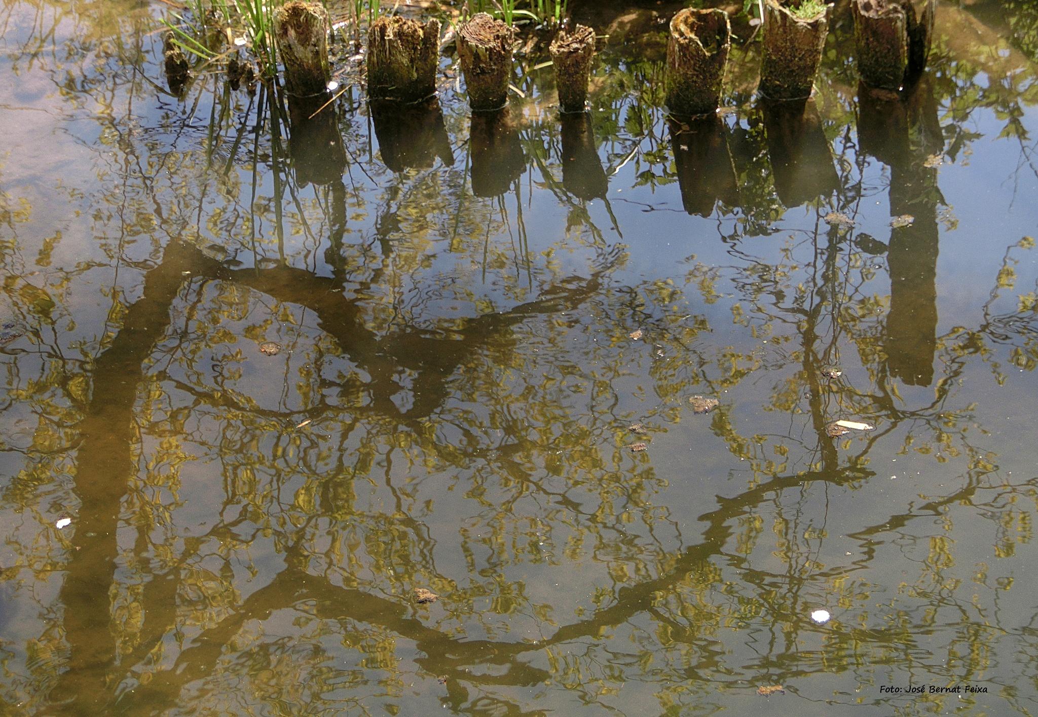 REFLEJOS EN EL AGUA, WATERSPIEGELING, WATER REFLECTION by José Bernat Feixa