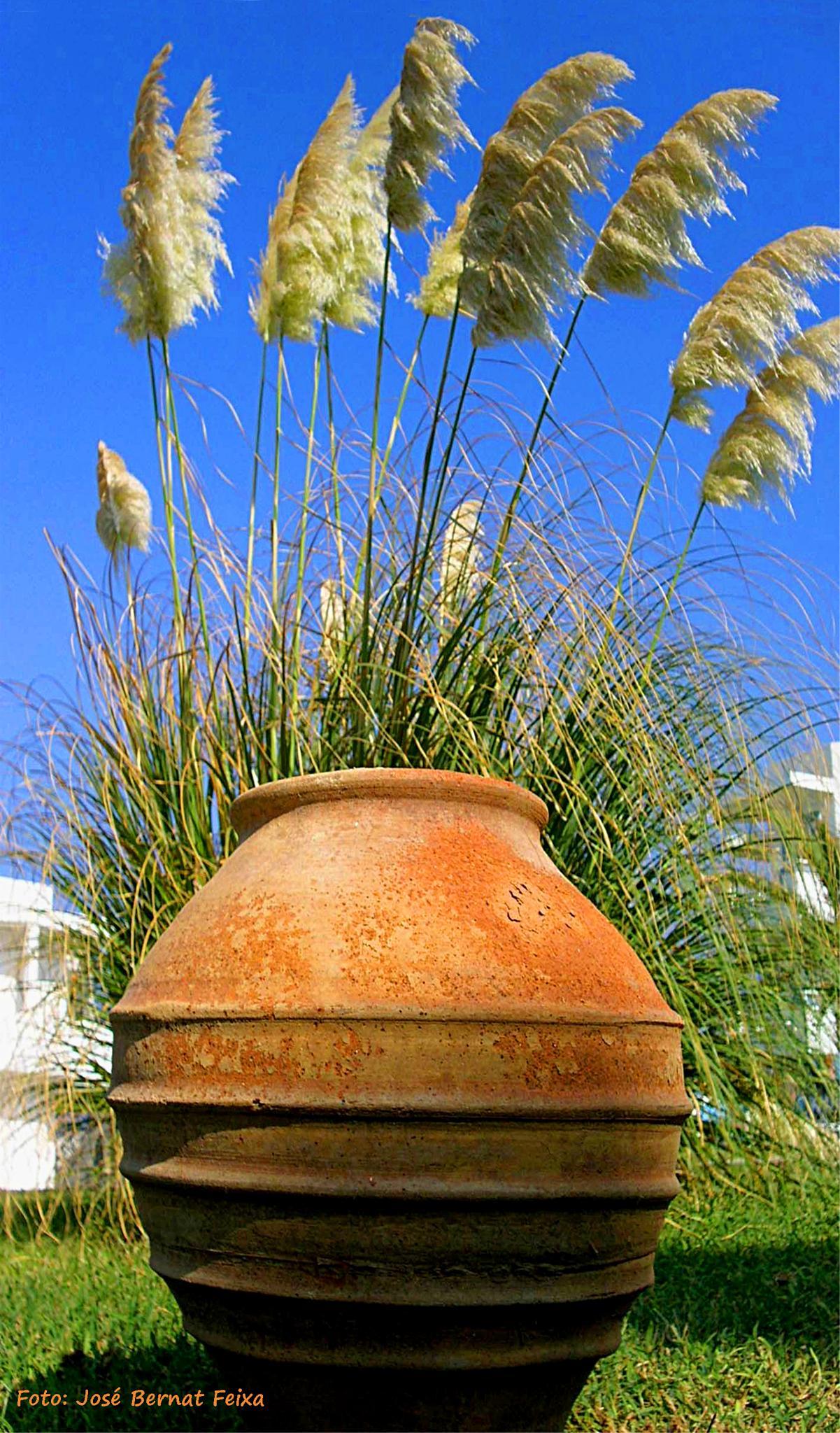 PLANTAS, PLANTEN, PLANTS,  Kreta by José Bernat Feixa