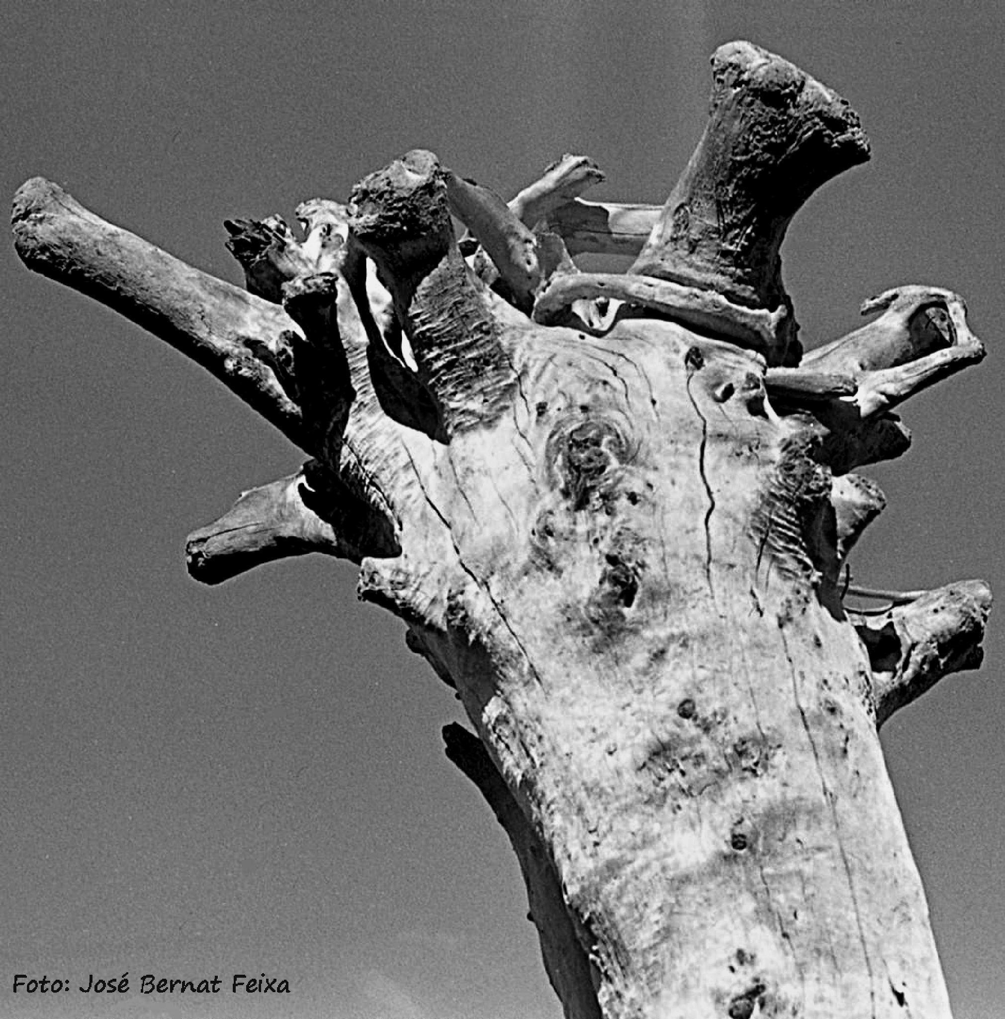 ÁRBOL, BOOM, TREE,  Tanger by José Bernat Feixa