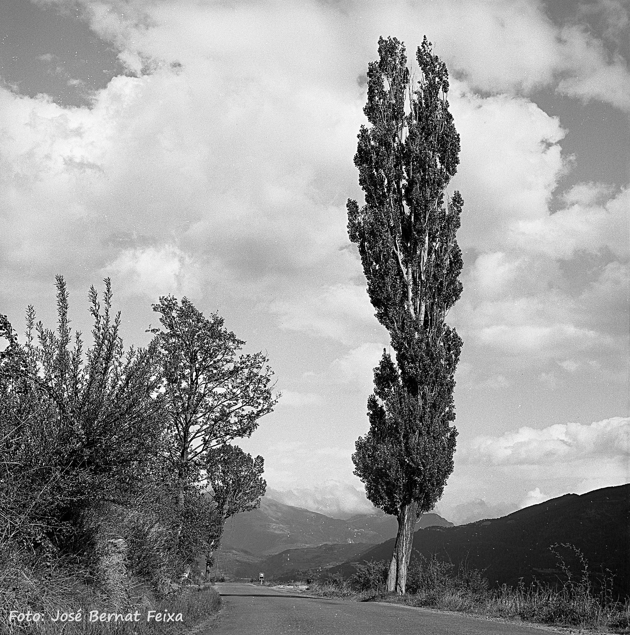 ÁRBOLES, BOMEN, TREES,  Catalunya by José Bernat Feixa