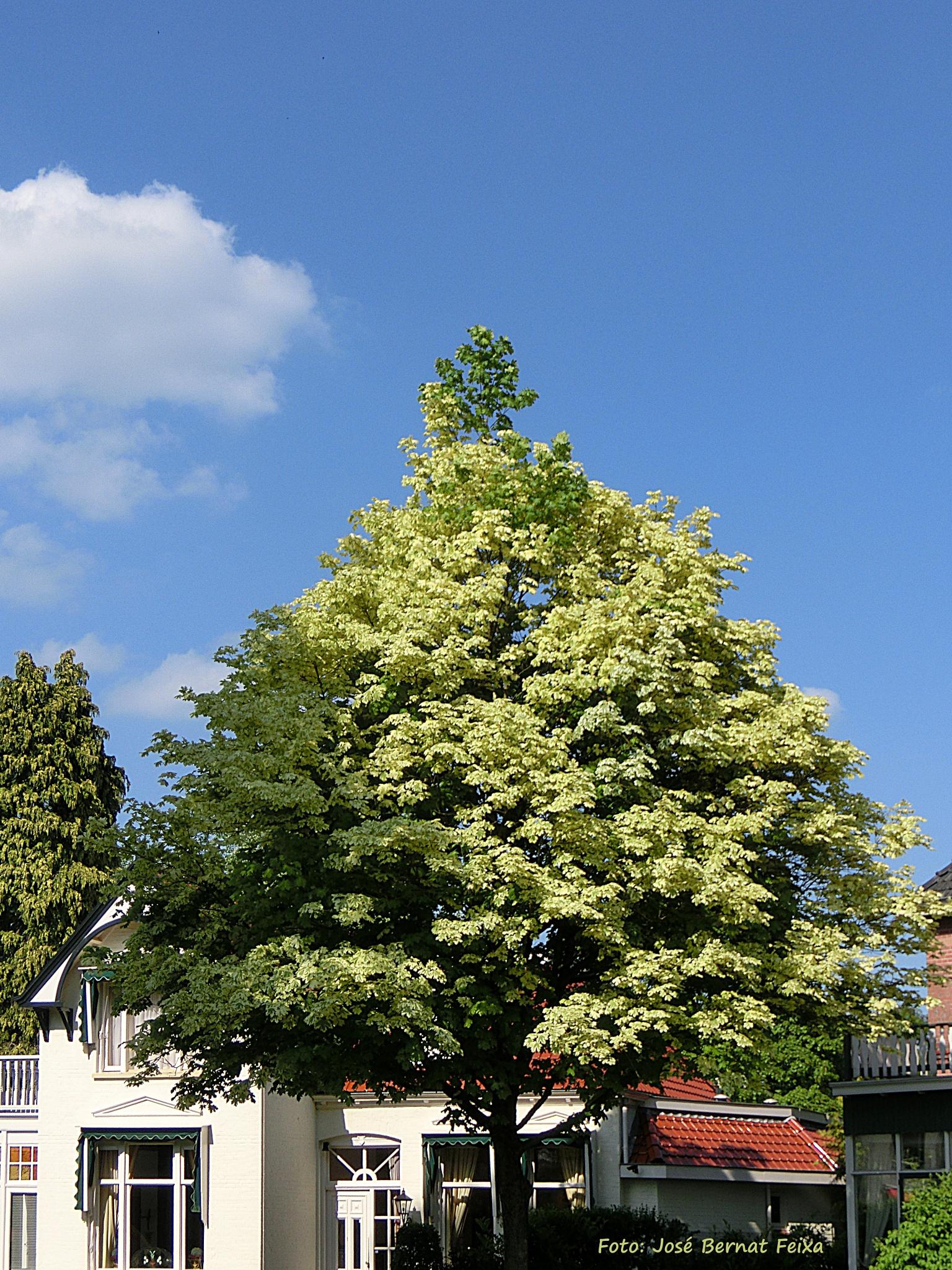 ÁRBOL, BOOM, TREE, Lochem by José Bernat Feixa