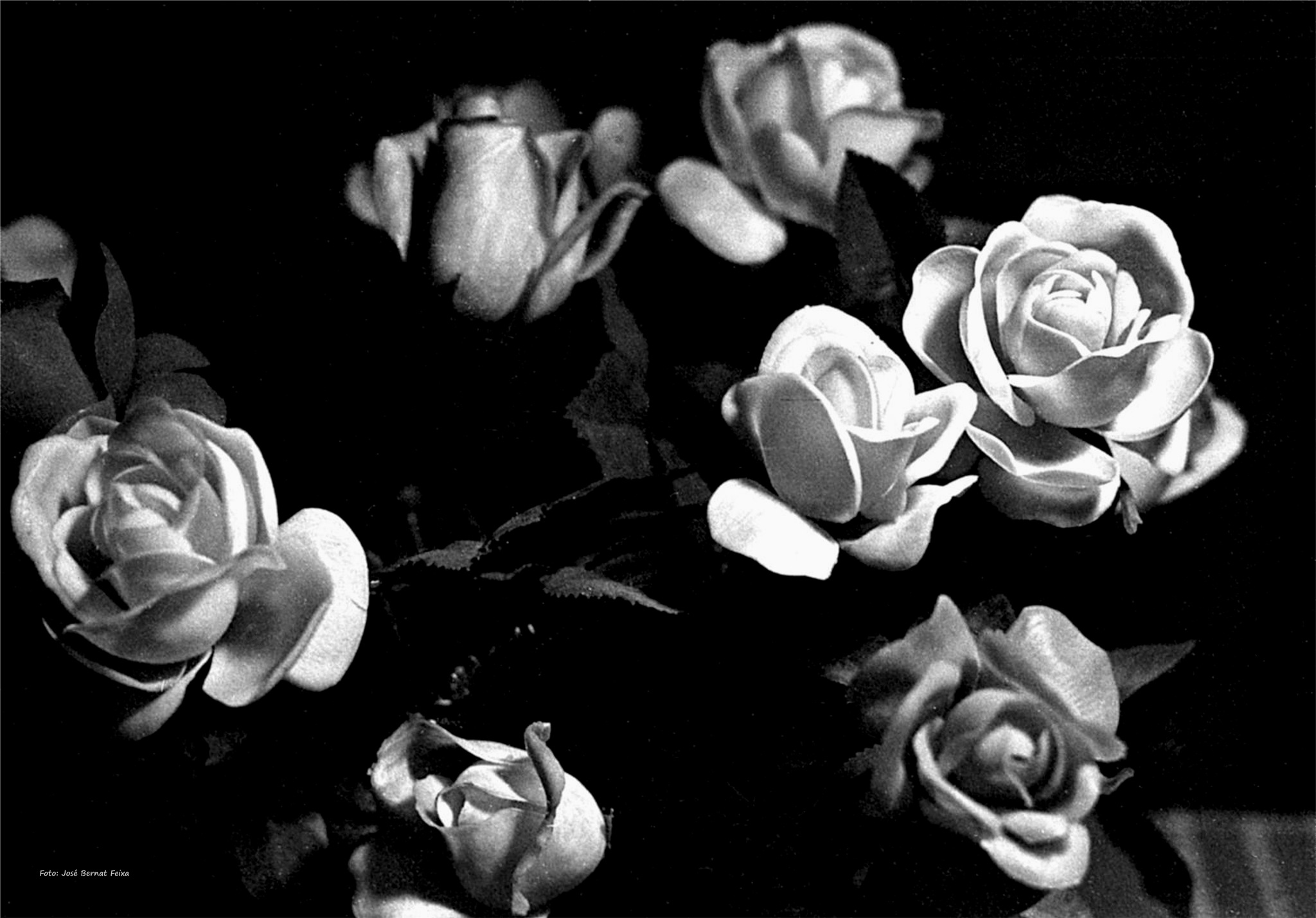 ROSAS; ROZEN; ROSES (60's) by José Bernat Feixa