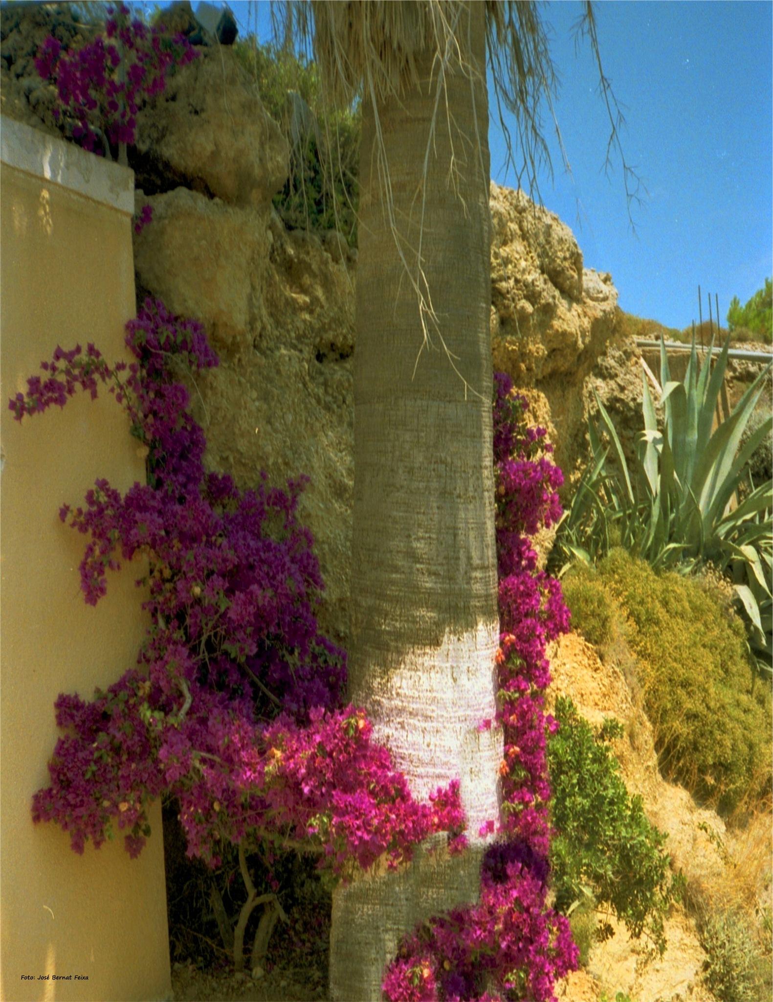 FLORES Y PLANTAS ; BLOEMEN EN PLANTEN ; FLOWERS AND PLANTS by José Bernat Feixa