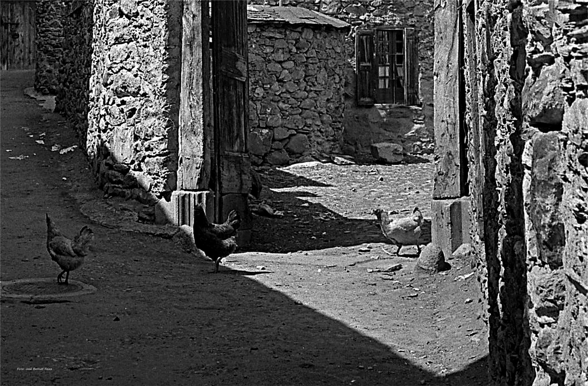 VISTA RURAL; LANDELIJK UITZICHT; RURAL VIEW (60's) by José Bernat Feixa