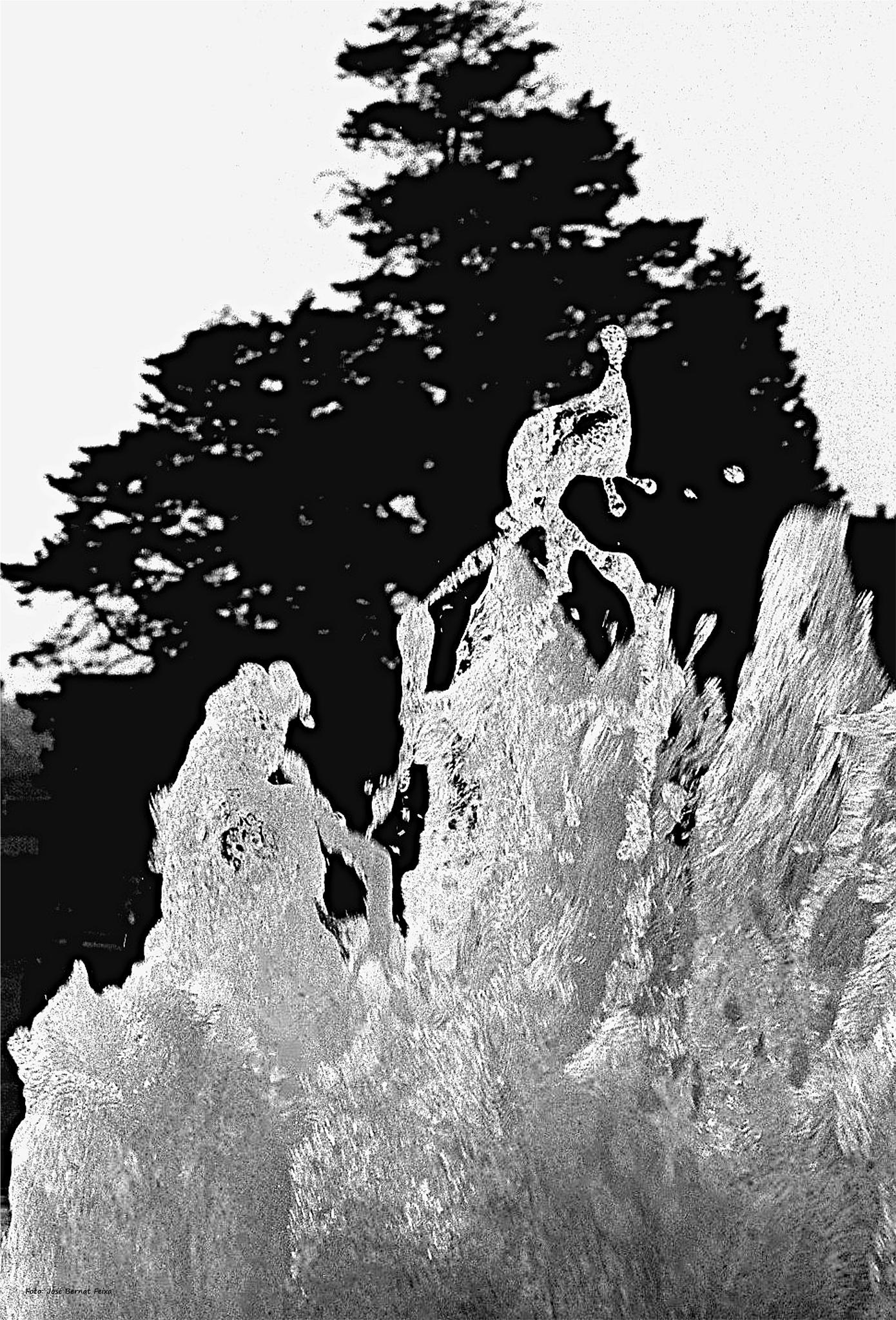 FUENTE DE AGUA; WATERFONTEIN; WATER FOUNTAIN (60's) by José Bernat Feixa