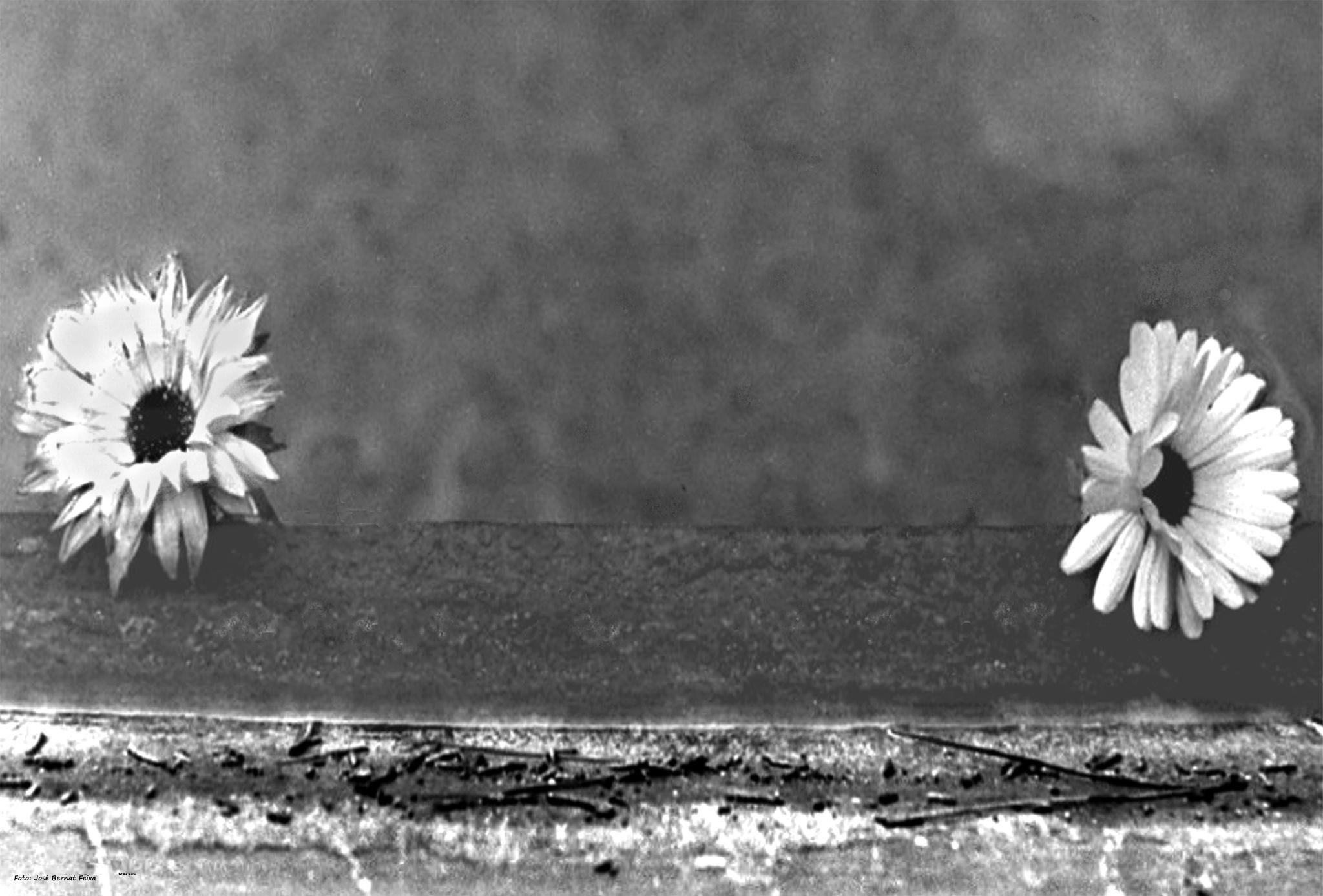 DOS FLORES; TWEE BLOEMEN; TWO FLOWERS (60's) by José Bernat Feixa