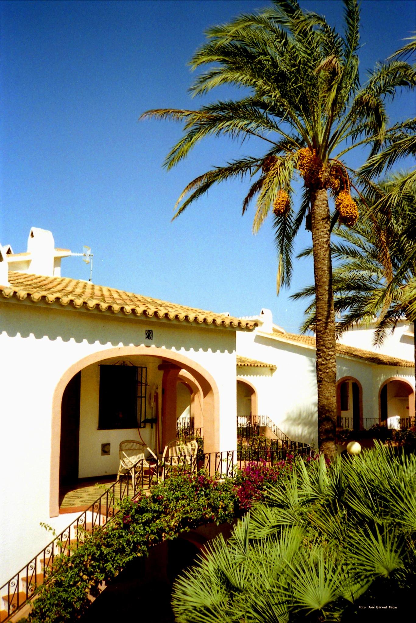 CASAS Y PALMERAS ; HUIZEN EN PALMBOMEN ; HOUSES AND PALM TREES by José Bernat Feixa