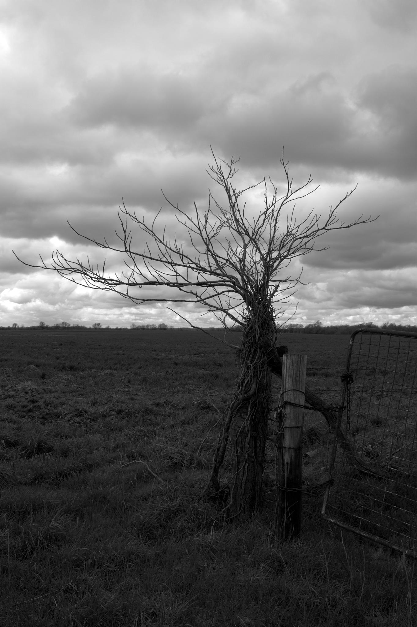 Fence Post by Camera Me