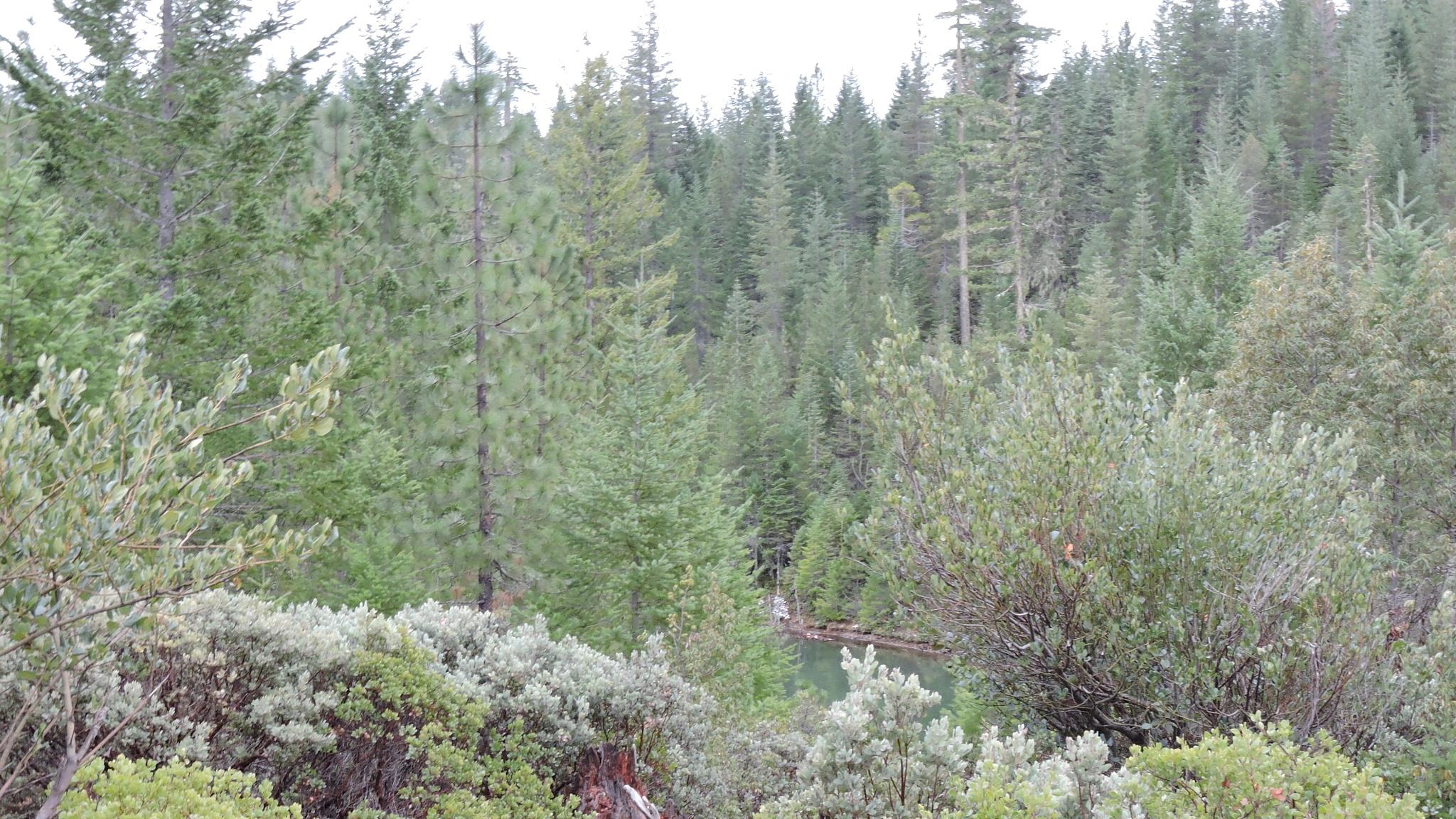 Remote Southern Oregon Mountain Pond.  by KrystaGarrison
