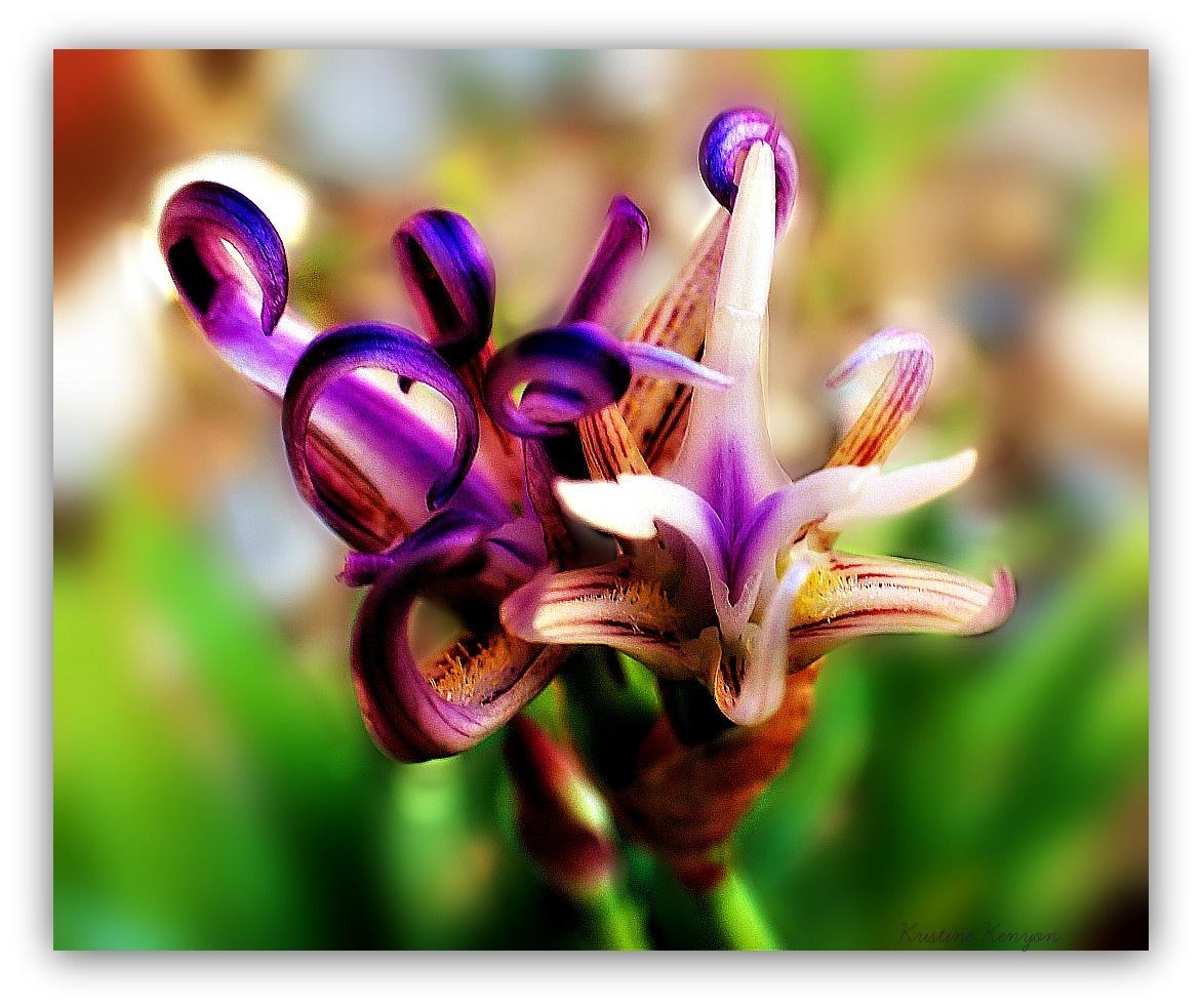 Amazing Reborn Iris  by kristine.kenyon