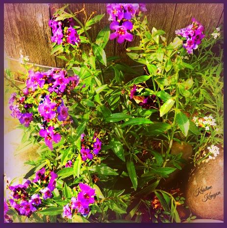 Angelica Purple by kristine.kenyon