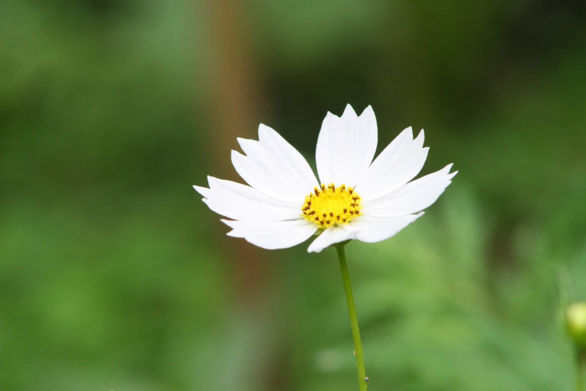 Photo in Nature #flower #nature #white
