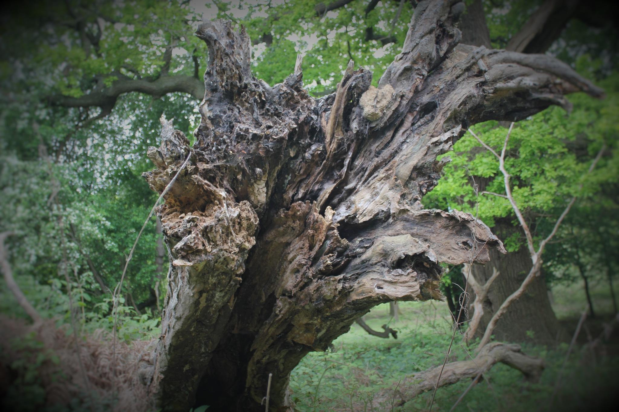 Broken Tree by colin.savidge