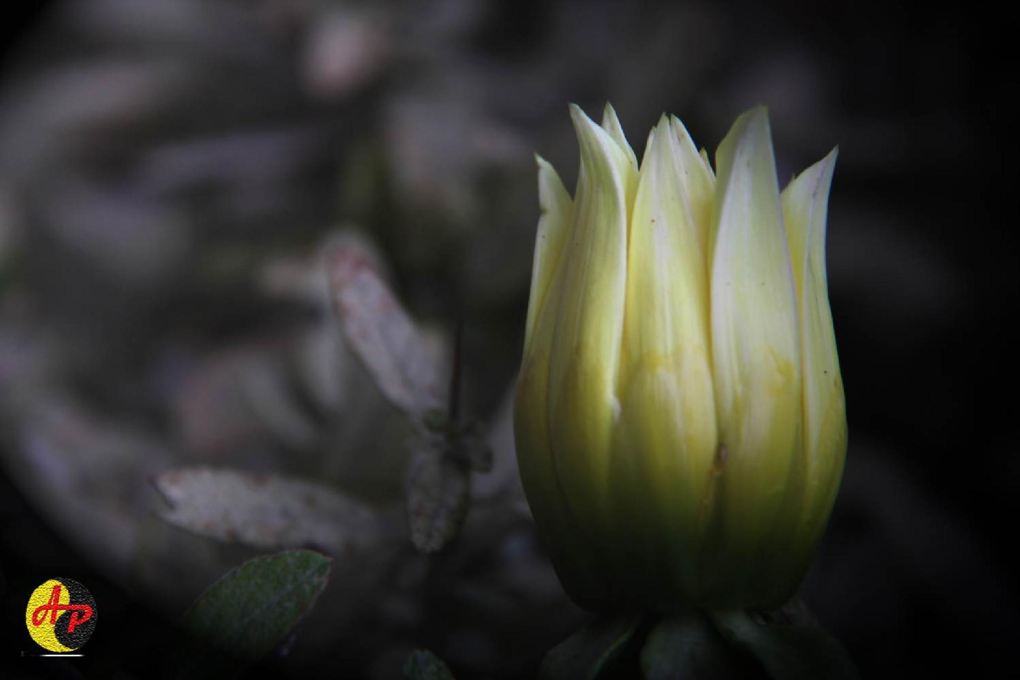 Photo in Macro #flower #light #night #natur