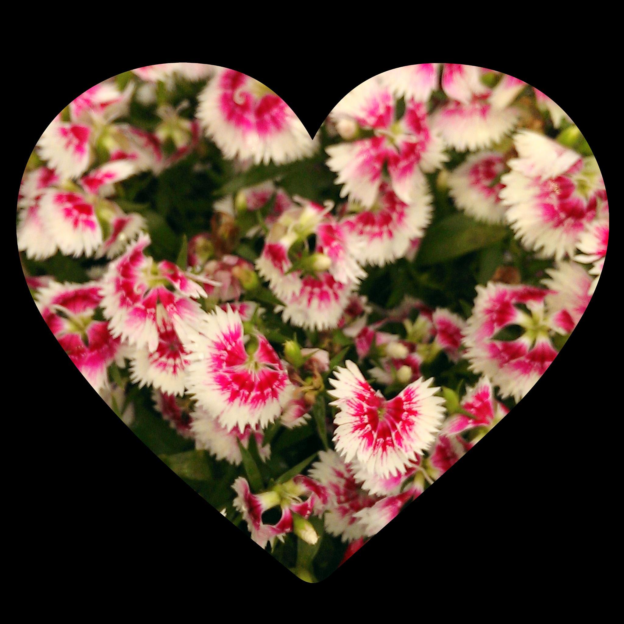 pretty flowers in heart frame  by tramilo