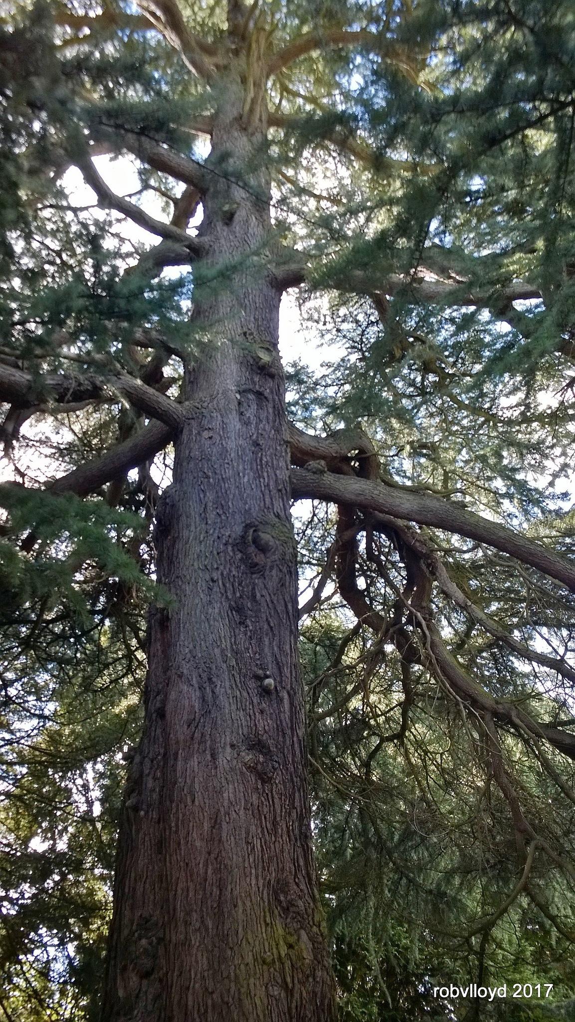 tree by rob.lloyd.3954