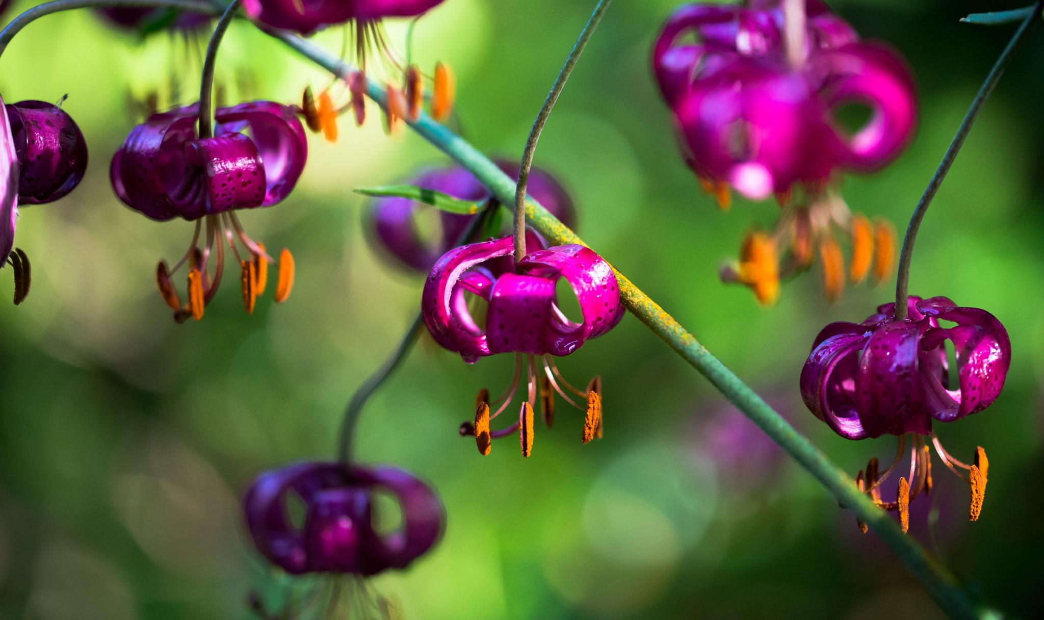 Flowers by sponte48