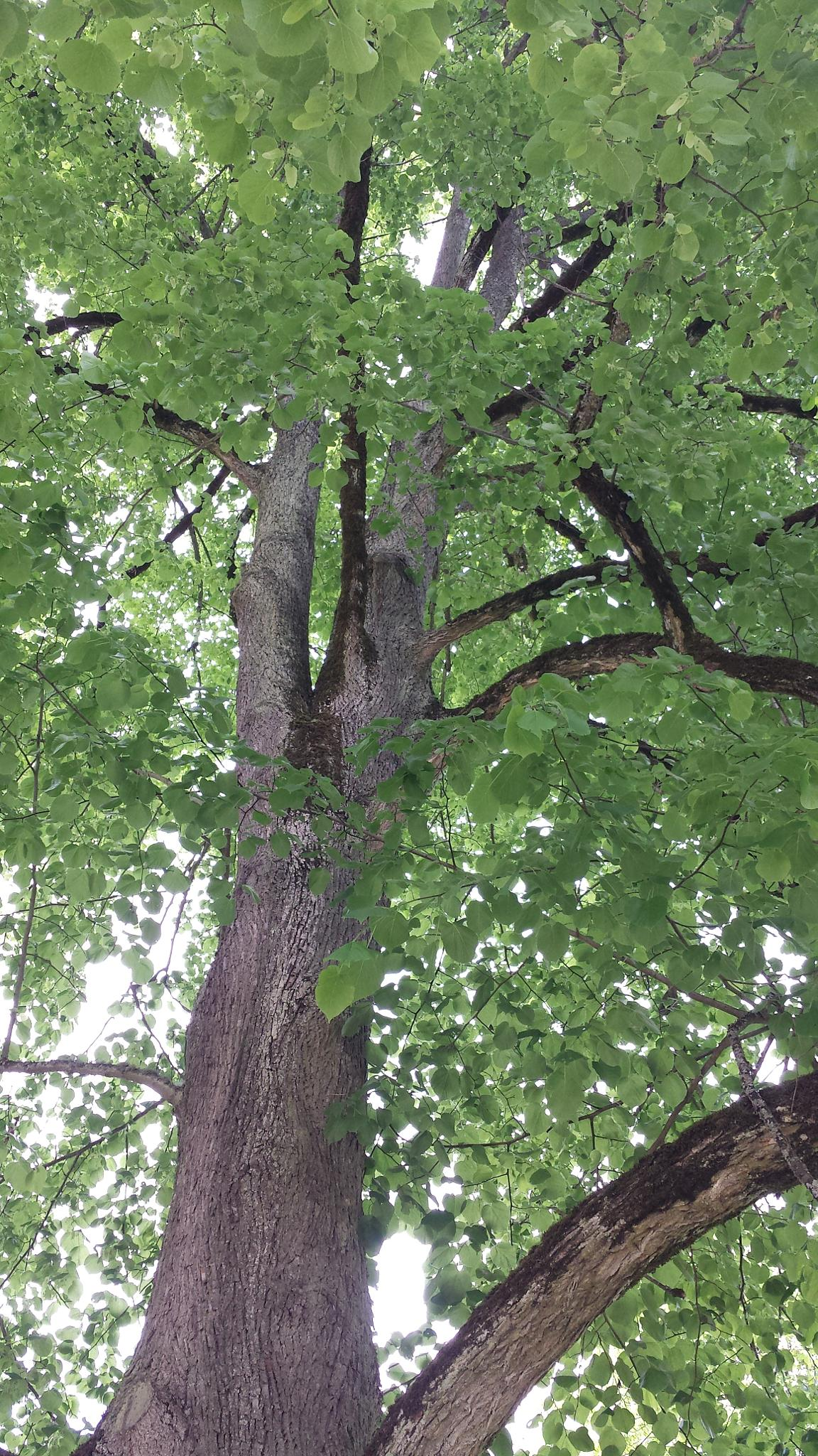 Photo in Nature #trees #green landscape #texture