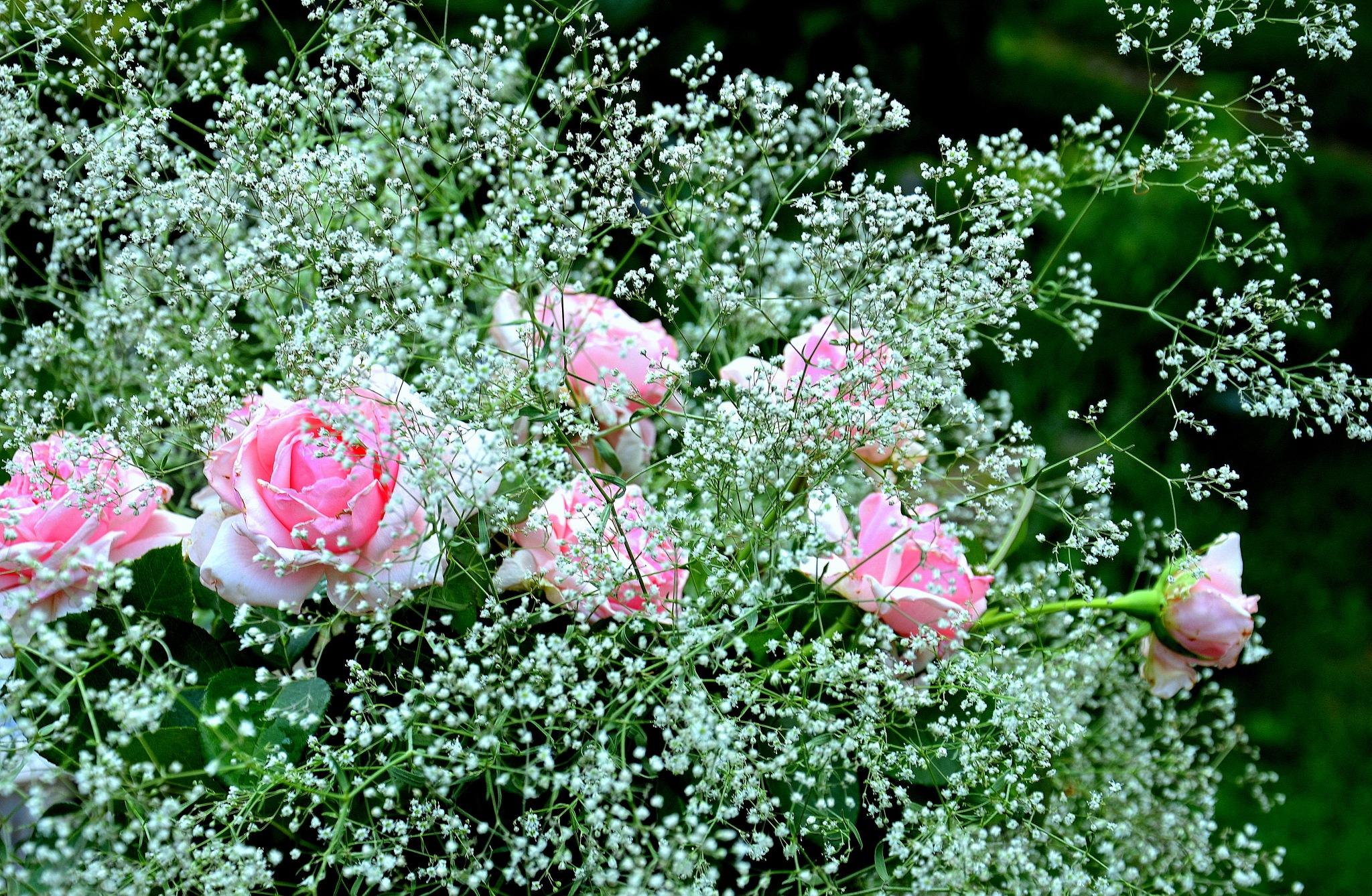 Roses&Garden Gypsophila by Ivo Frbéžar