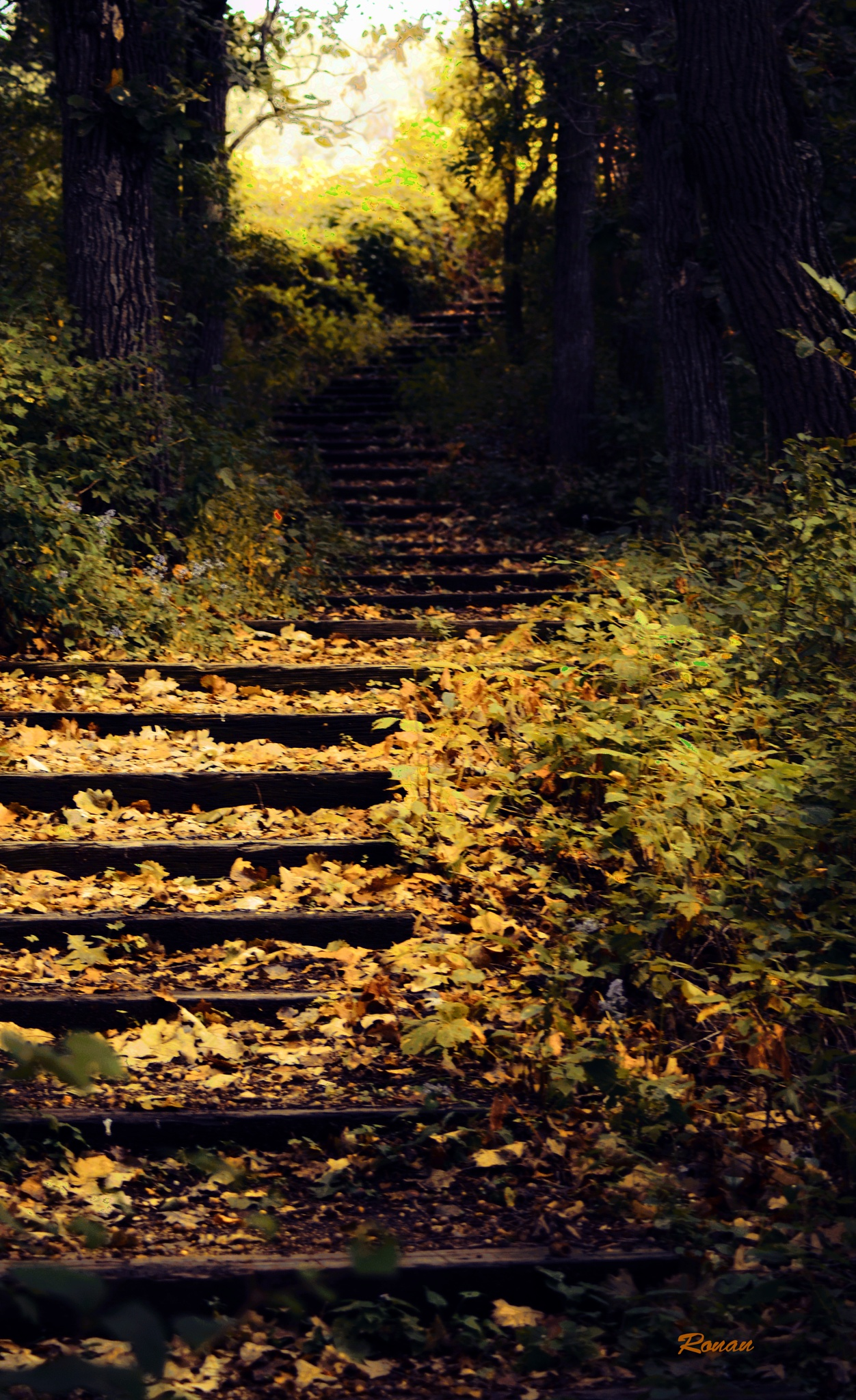 The stairs that lead upward by Kimberly Ronan