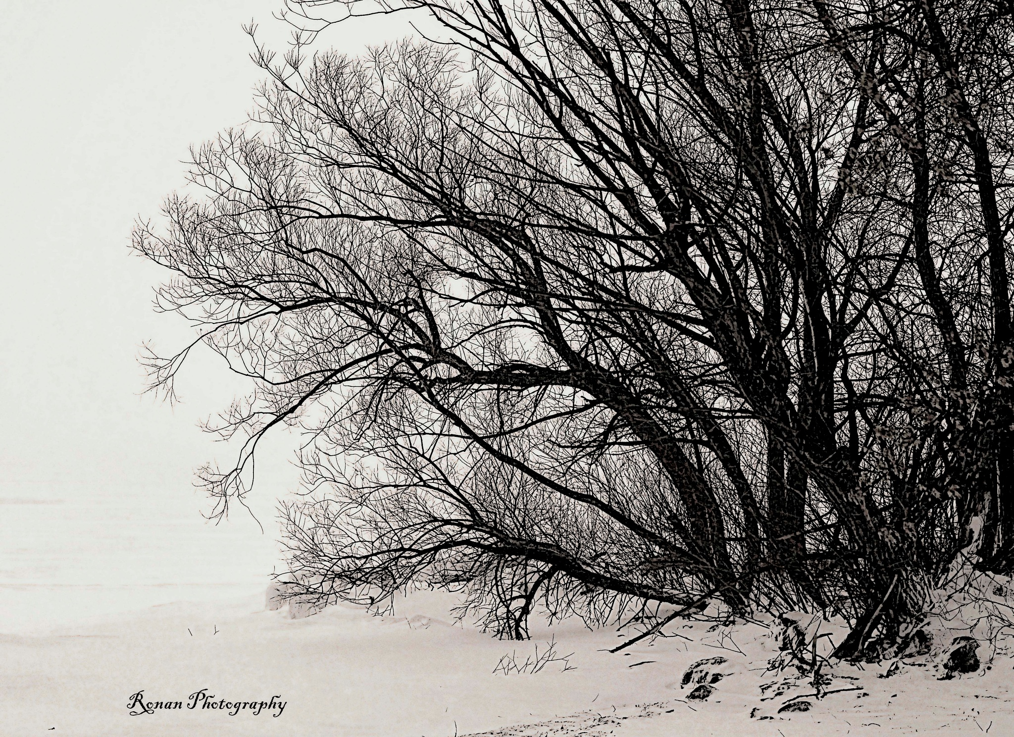 Black and White Snow and Tree by Kimberly Ronan