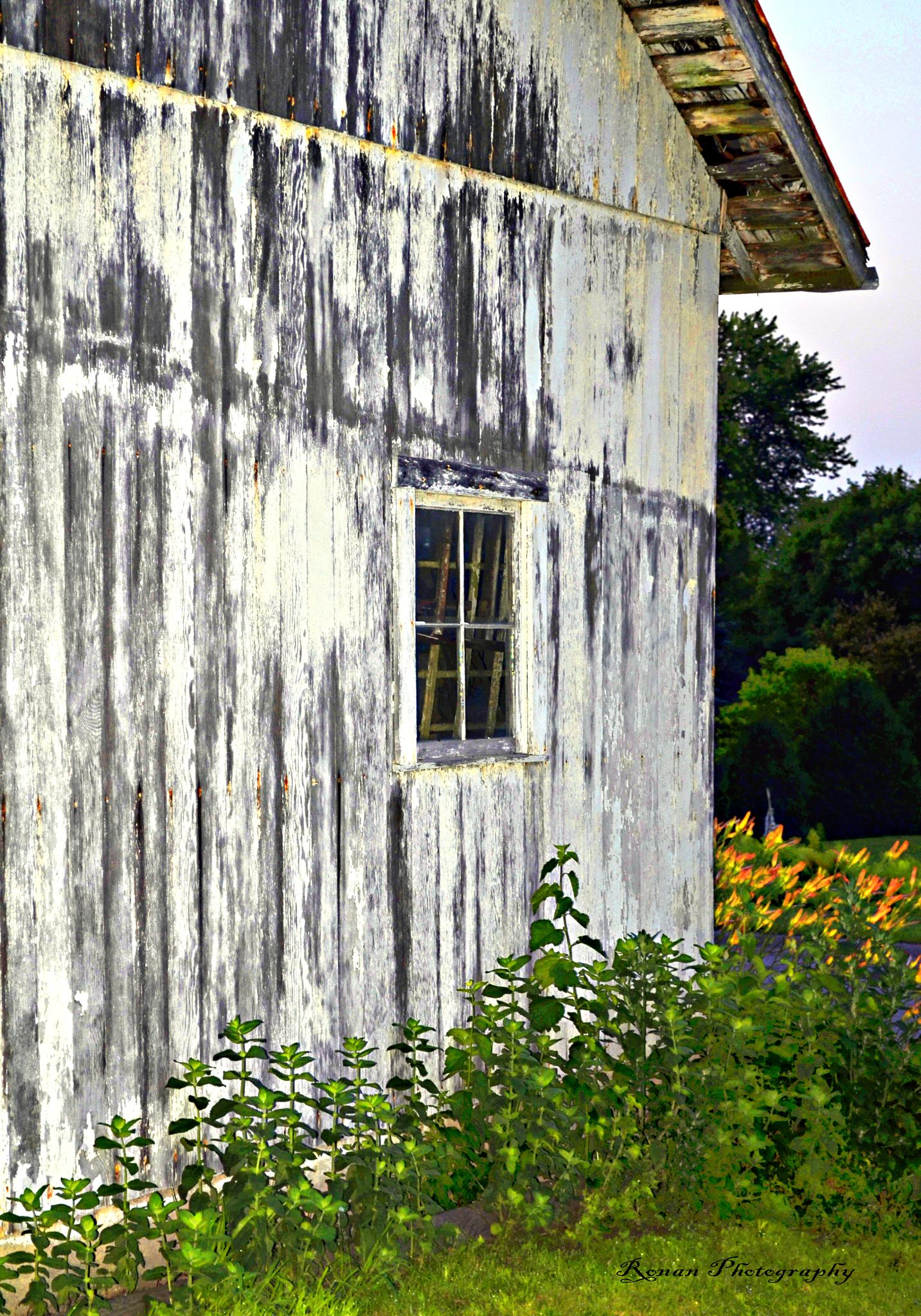 Old Barn Side by Kimberly Ronan