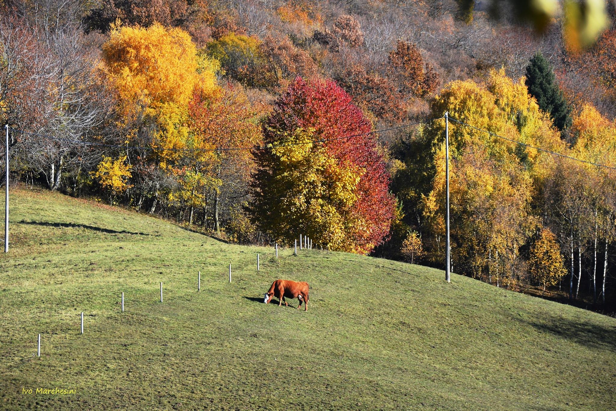 I colori dell'autunno by ivomarkes