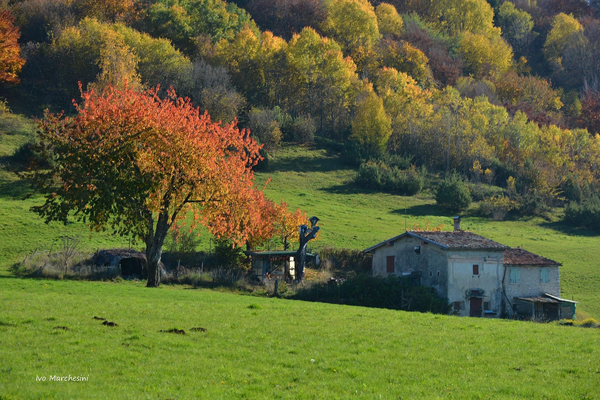 Autumn by ivomarkes