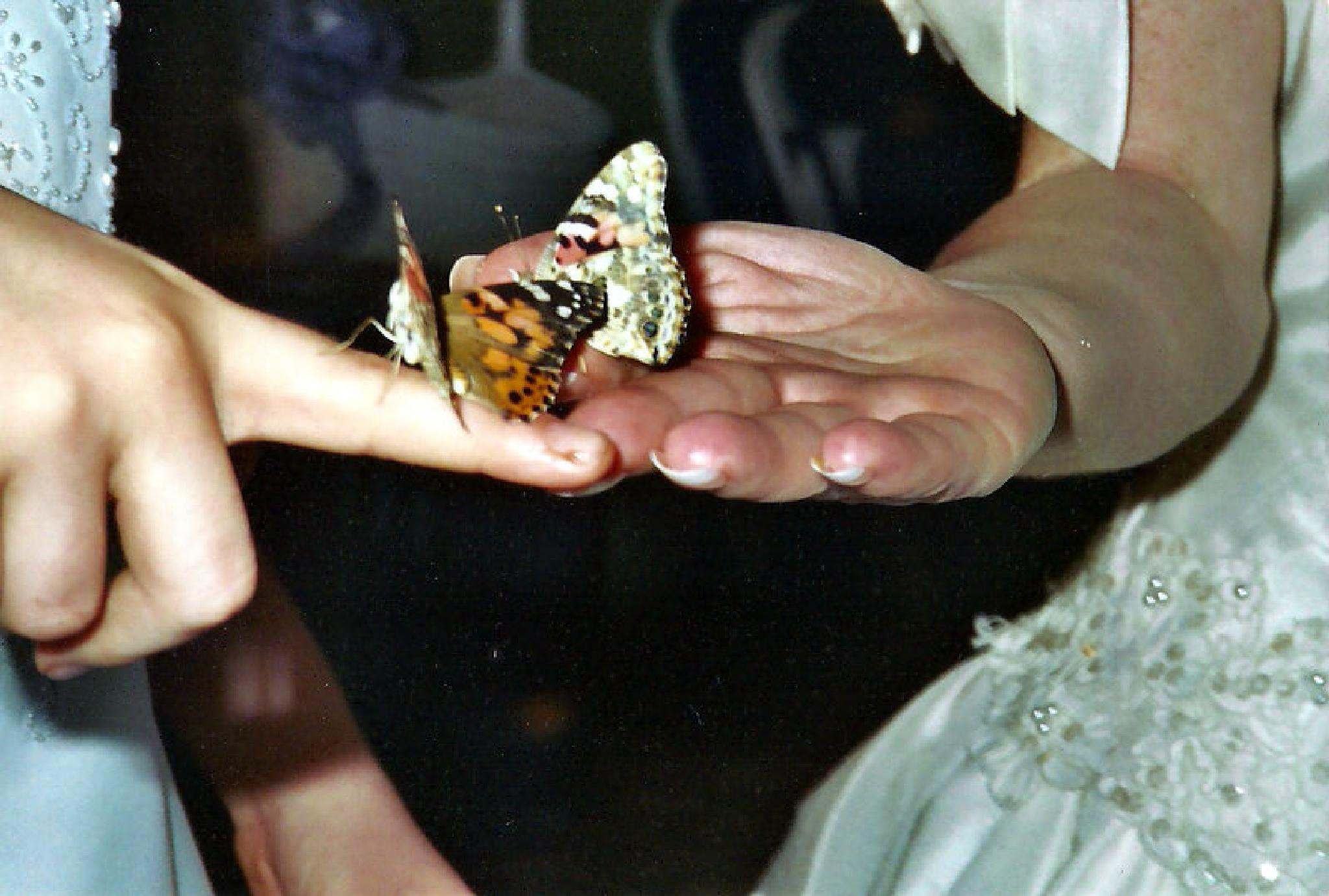 Release of the Butterflies by angela.hatchett.161