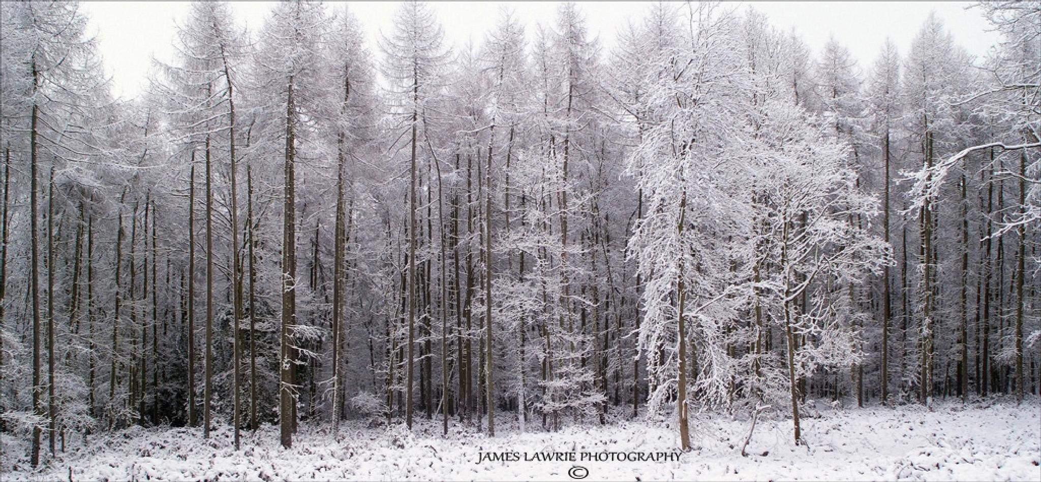 Photo in Nature #snow #ice #woods #nuneaton #cold