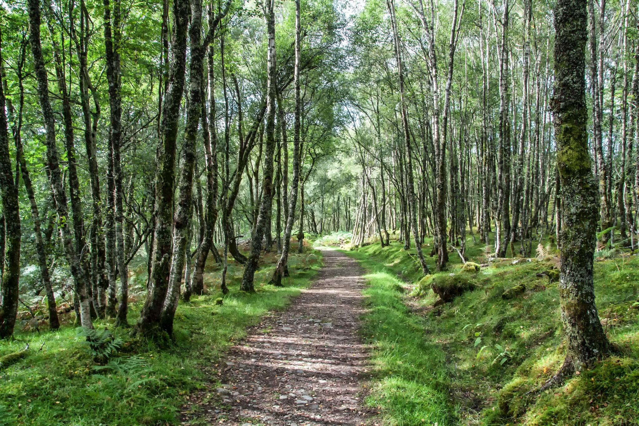 Woodland Walk by martin.davis.5243817