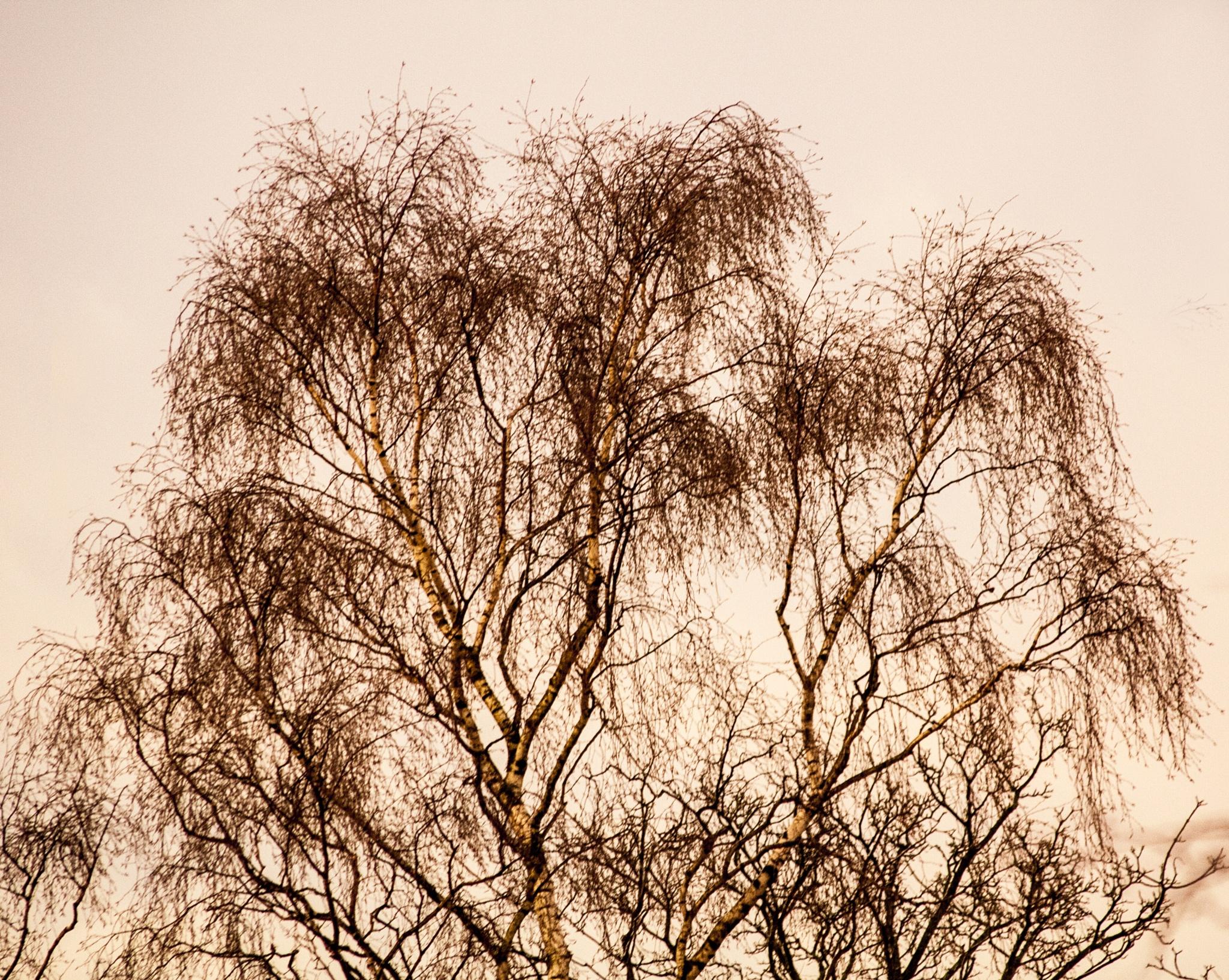 Weeping Tree by martin.davis.5243817