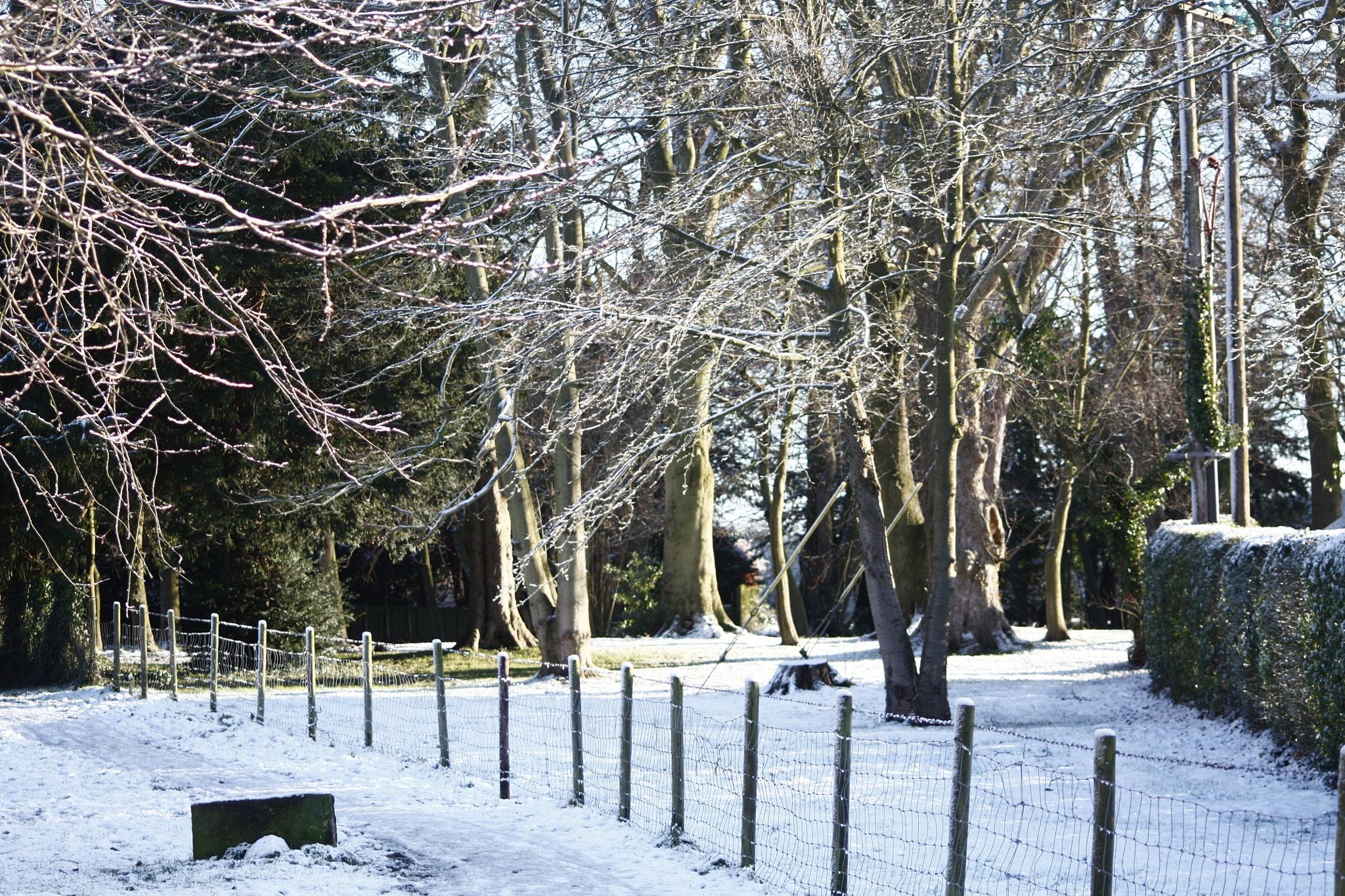 Sun and Snow by martin.davis.5243817