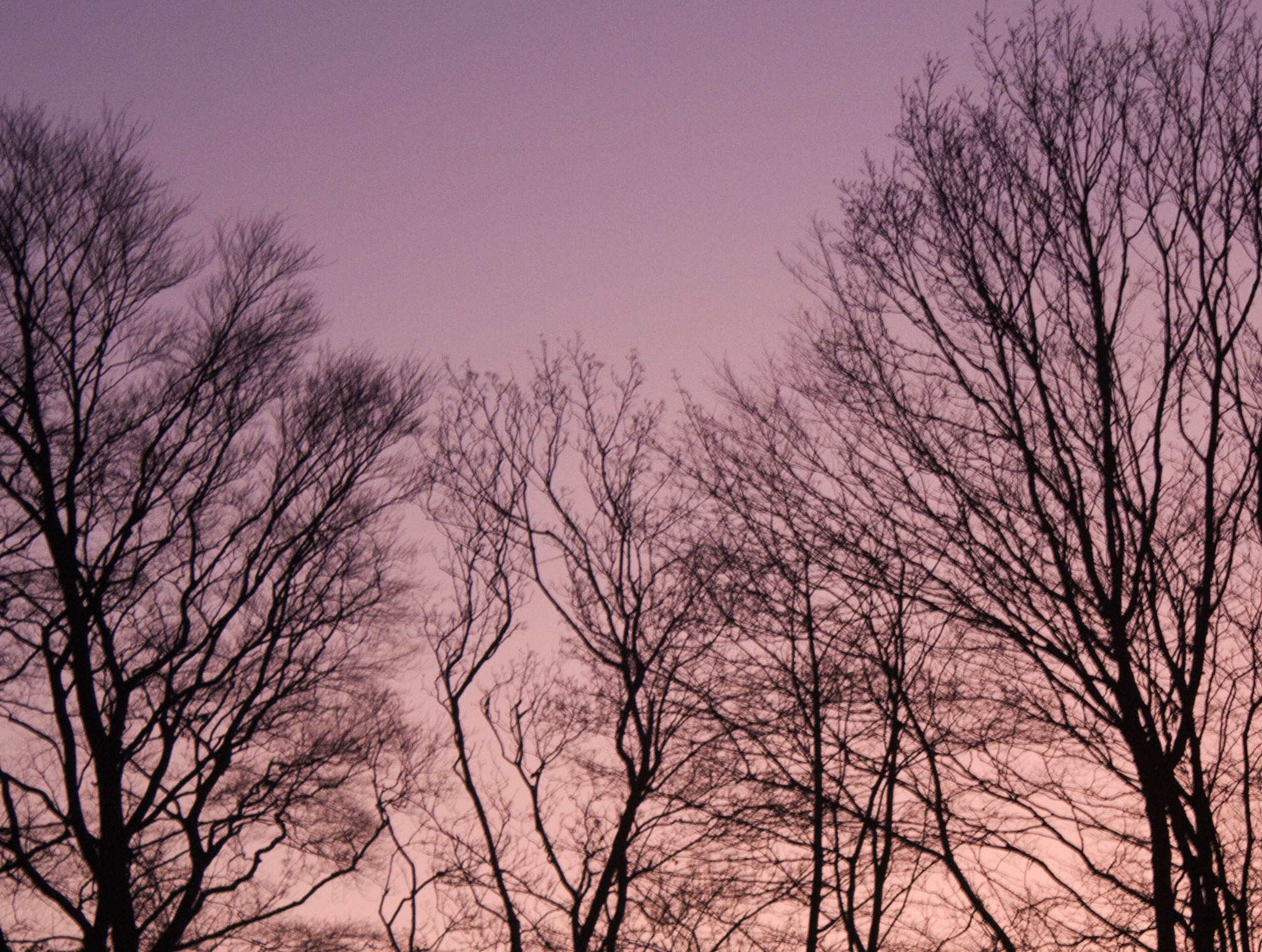 Trees at Sunset by martin.davis.5243817